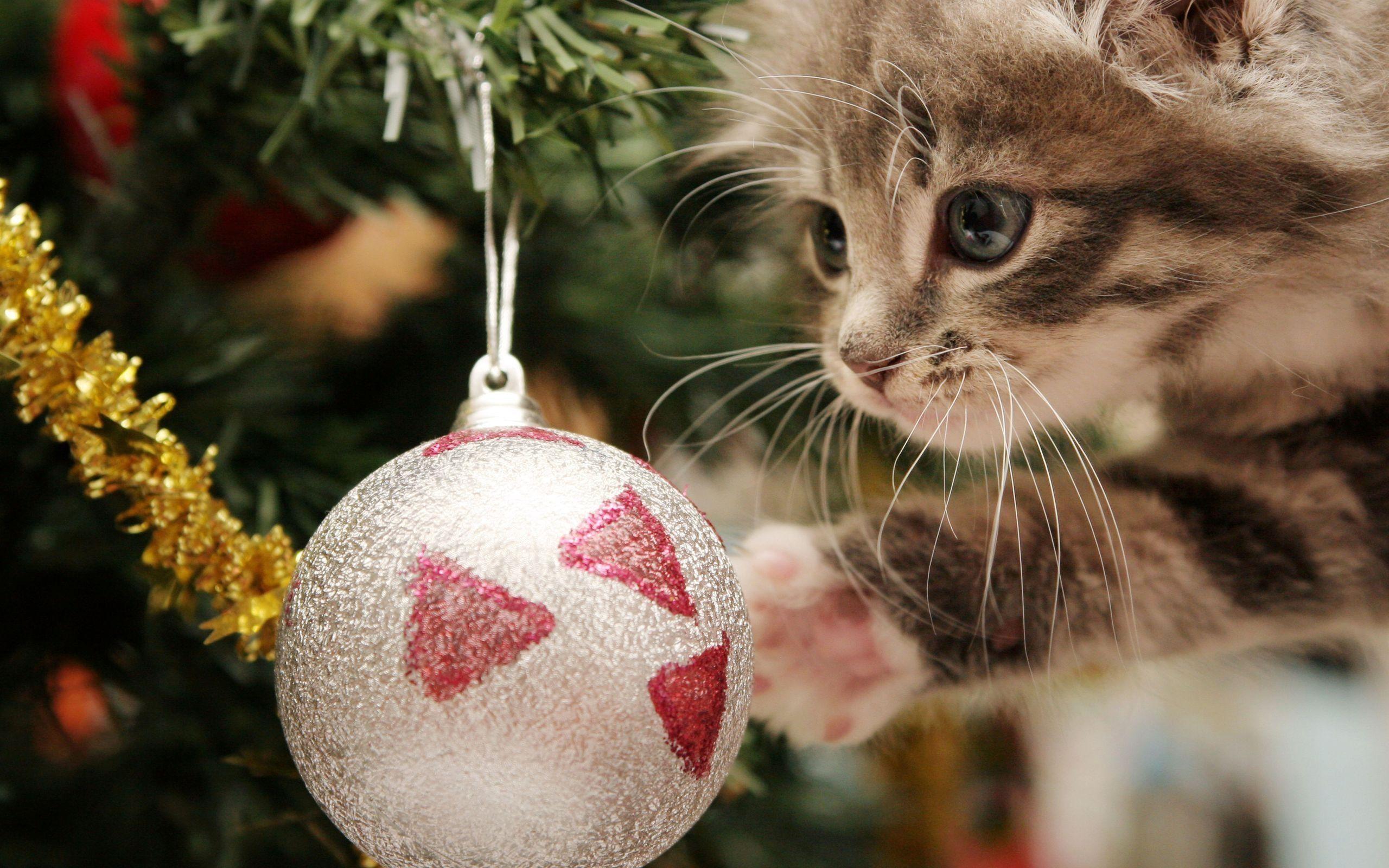 Xmas Stuff For > Christmas Kittens Wallpaper