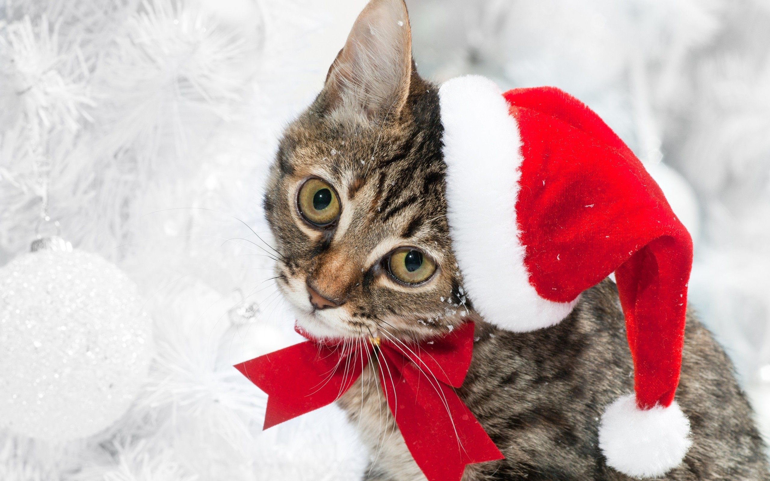 The Christmas Kitty wallpaper