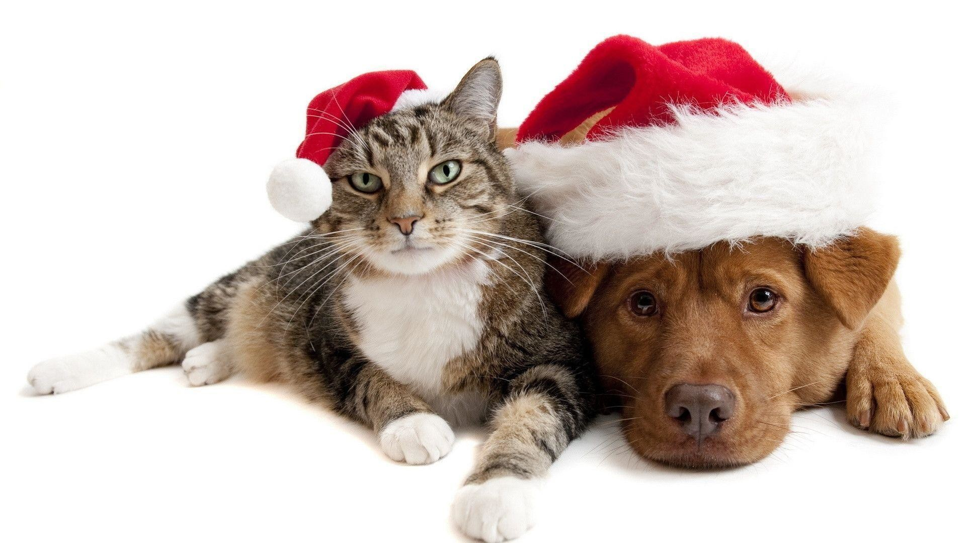 Cute Kittens and Dogs Christmas HD Wallpaper For Desktop .