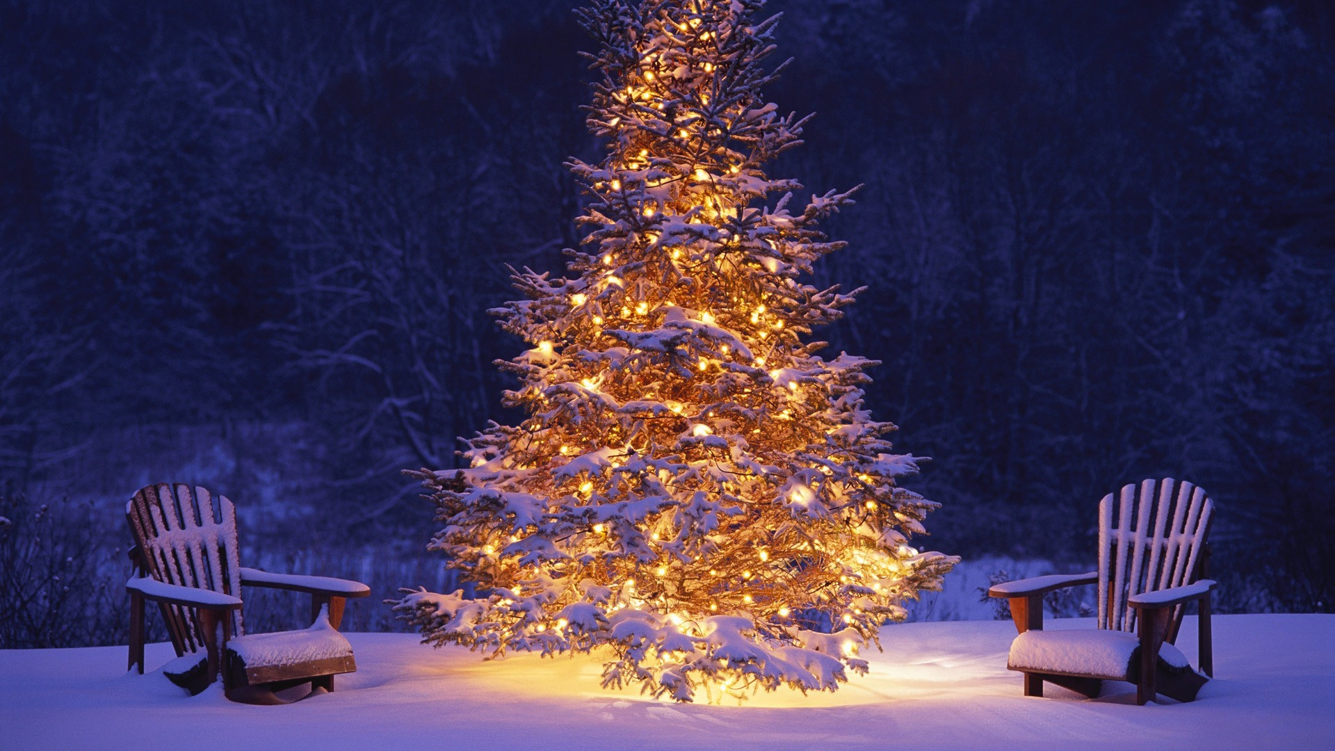 Beautiful Christmas Tree in Winter HD Picture