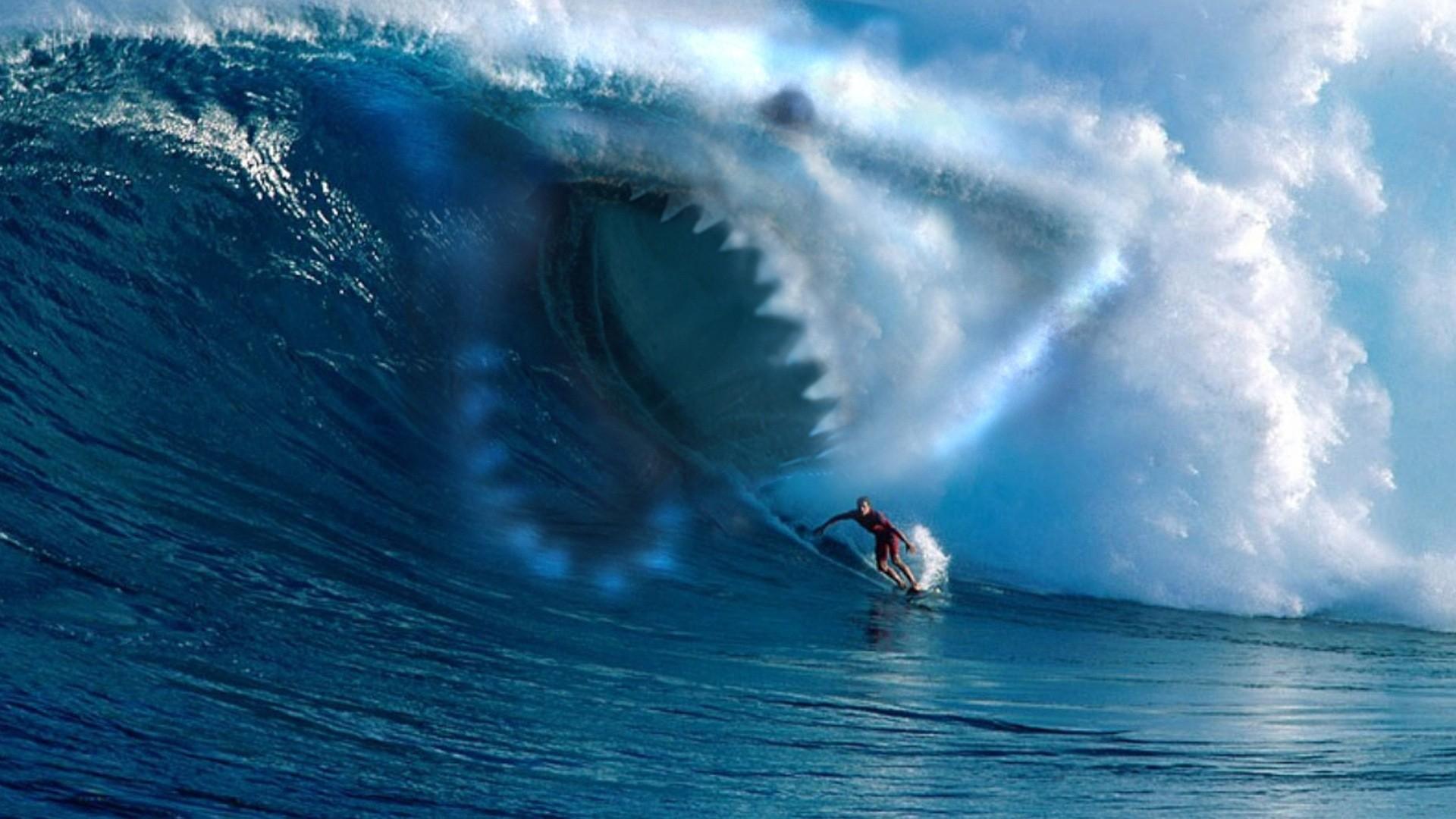 … wave · wave, shark, surfing