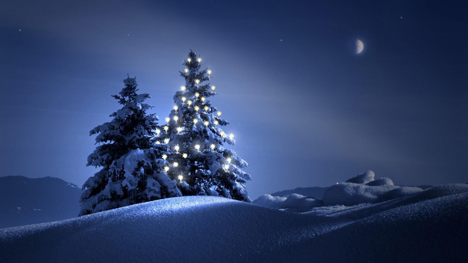 Christmas Tree On Snow Wallpaper Wide Wallpaper | WallpaperLepi