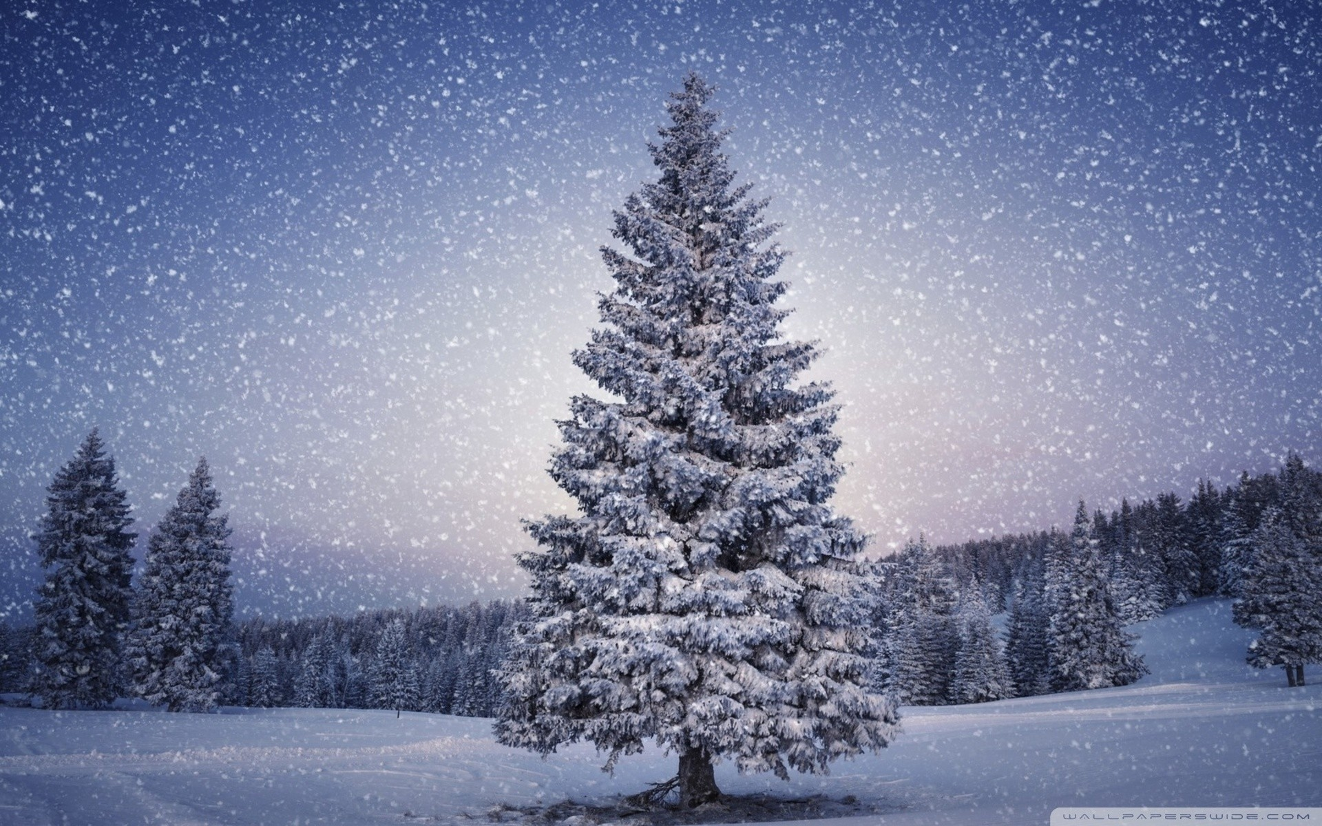 Beautiful winter nature wallpaper pictures