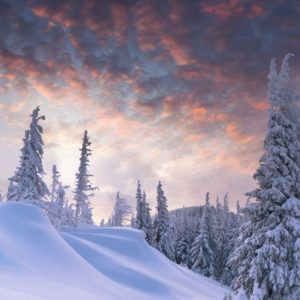 Snowy Christmas Scenes