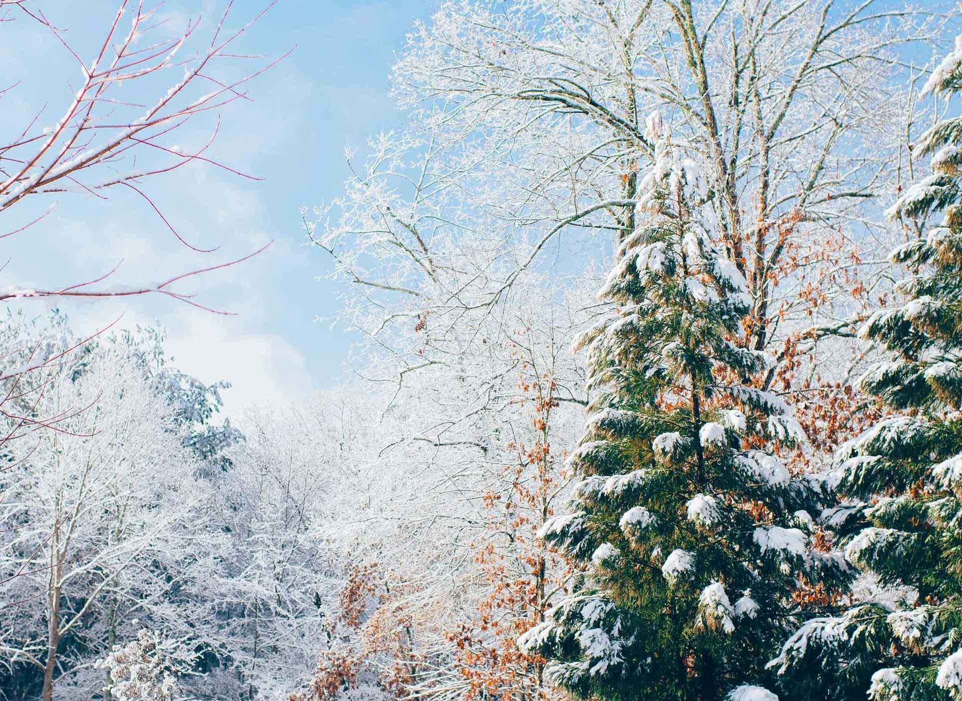 Full Screen Wallpaper of a colourful snow scene