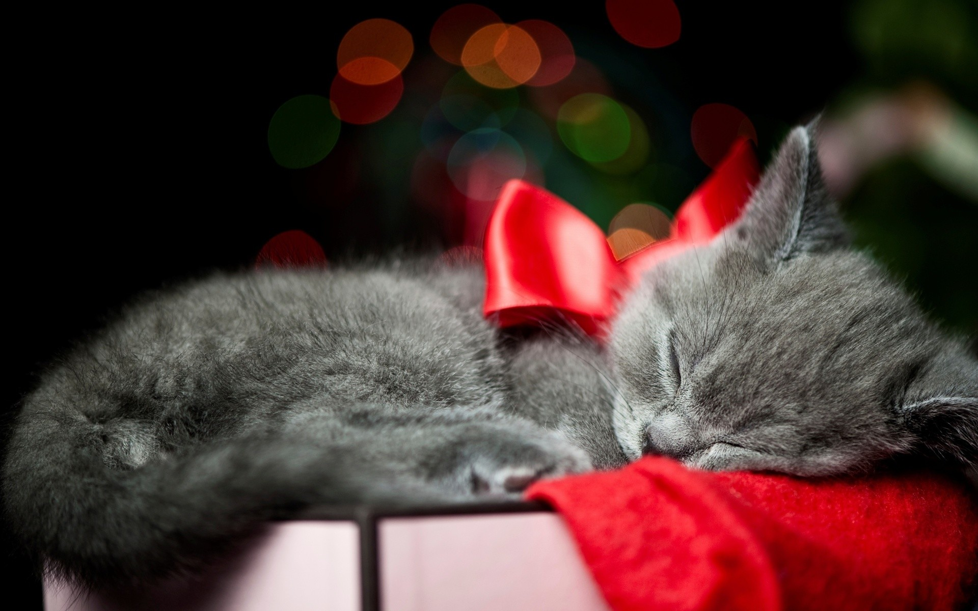 christmas bow red animals cats kittens whiskers sleep cute wallpaper .