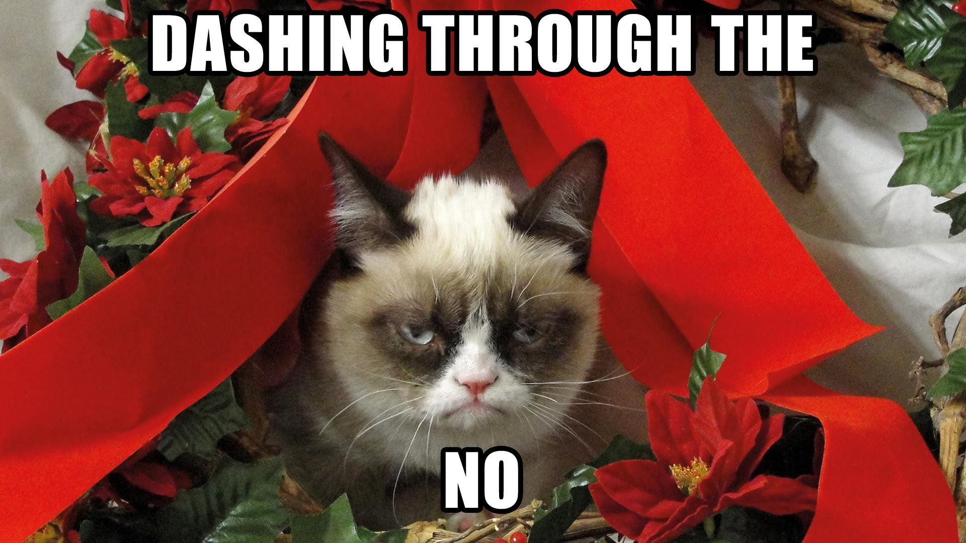 Grumpy Cat Meme Pictures humor funny cats christmas wallpaper | |  98020 | WallpaperUP