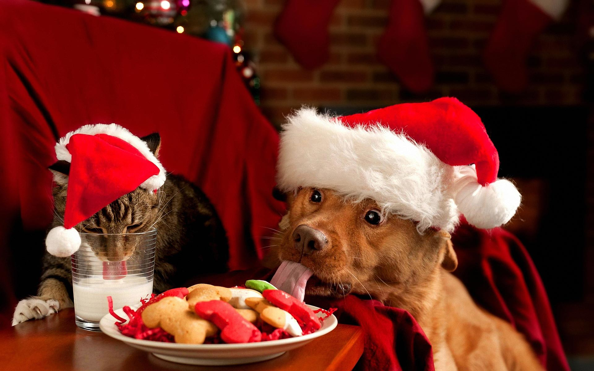 Wallpapers For > Cute Merry Christmas Wallpaper Cats