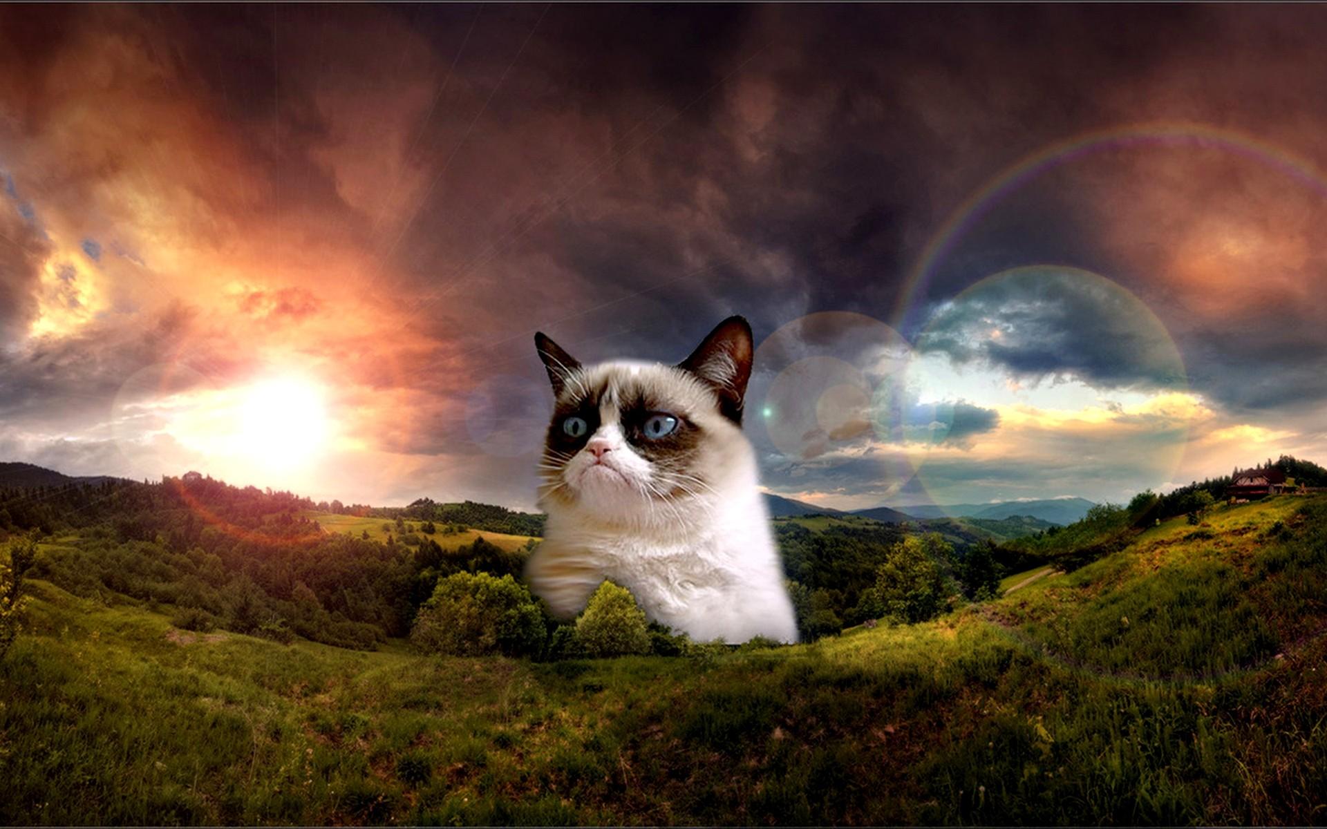 Grumpy Cat. Grumpy Cat No Wallpaper