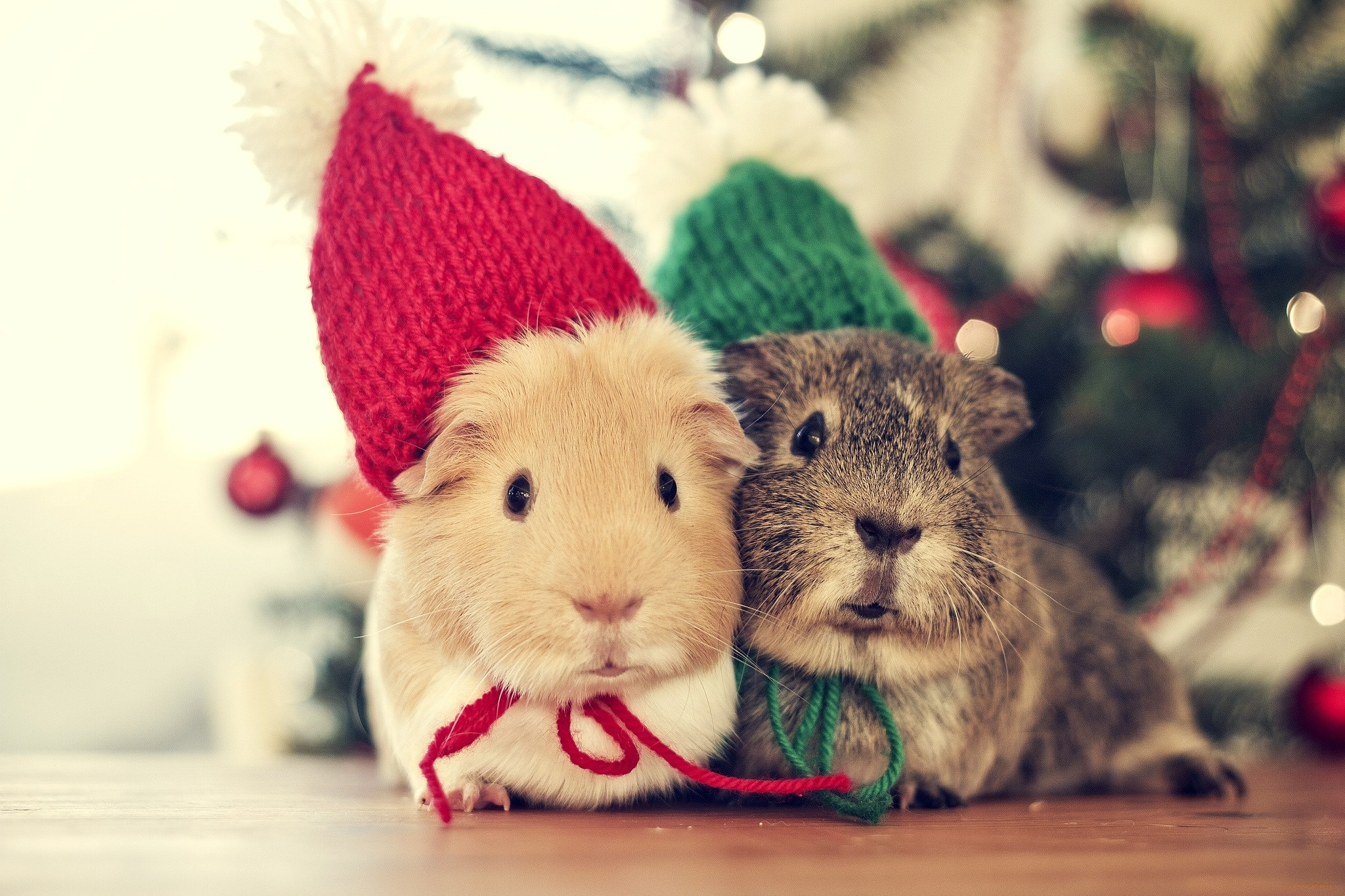 Christmas Animals Cute Winter Cold Cozy Couple Holiday Mouse wallpaper .