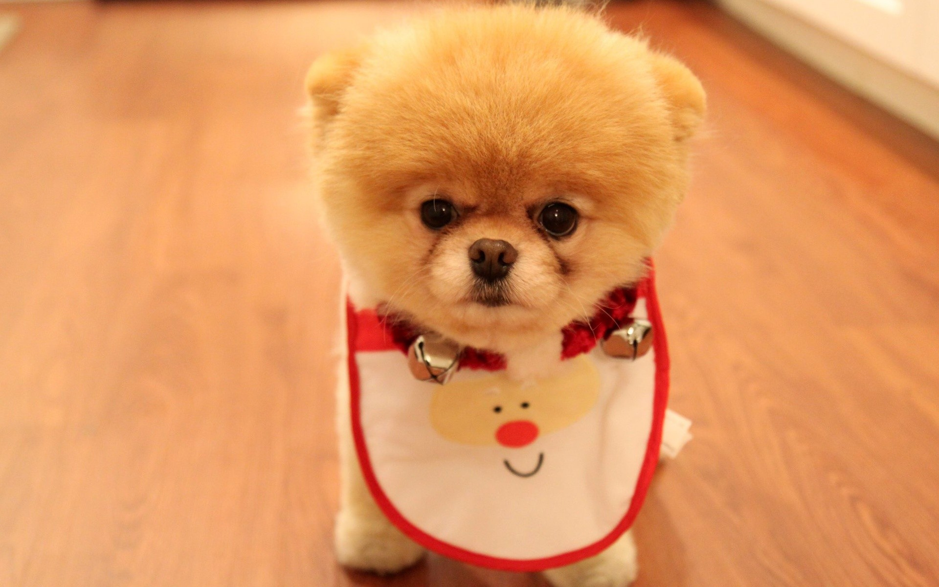 christmas wallpaper with dogs download
