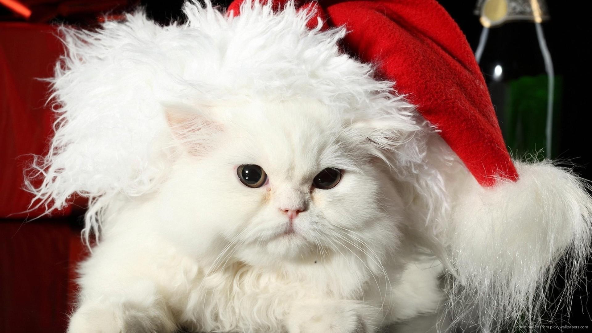 christmas wallpaper holidays cat white 1920×1080