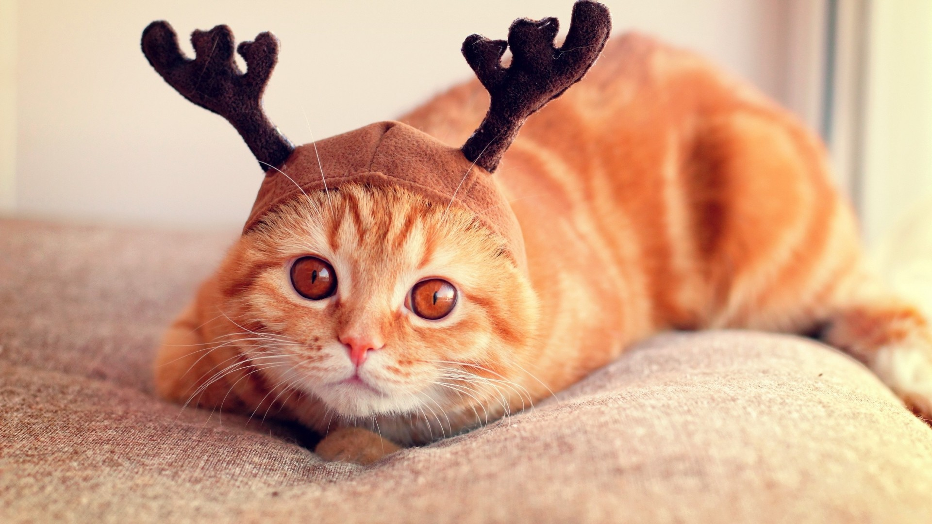 Download now full hd wallpaper christmas deer cat sofa …