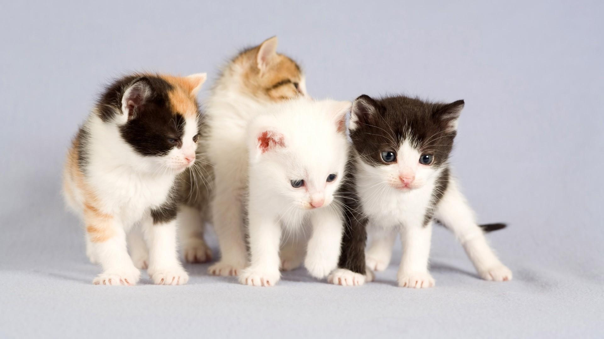 Cute Dog and Cat Wallpaper | PixelsTalk.Net | Epic Car Wallpapers |  Pinterest | Cat wallpaper, Wallpaper and Hd wallpaper