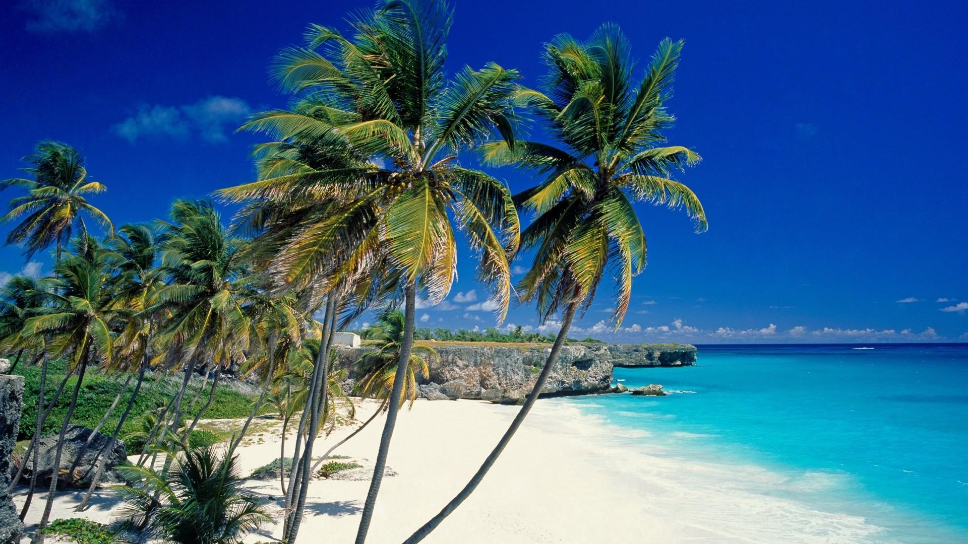Wallpaper beach, tropics, sea, sand, palm trees, beautiful