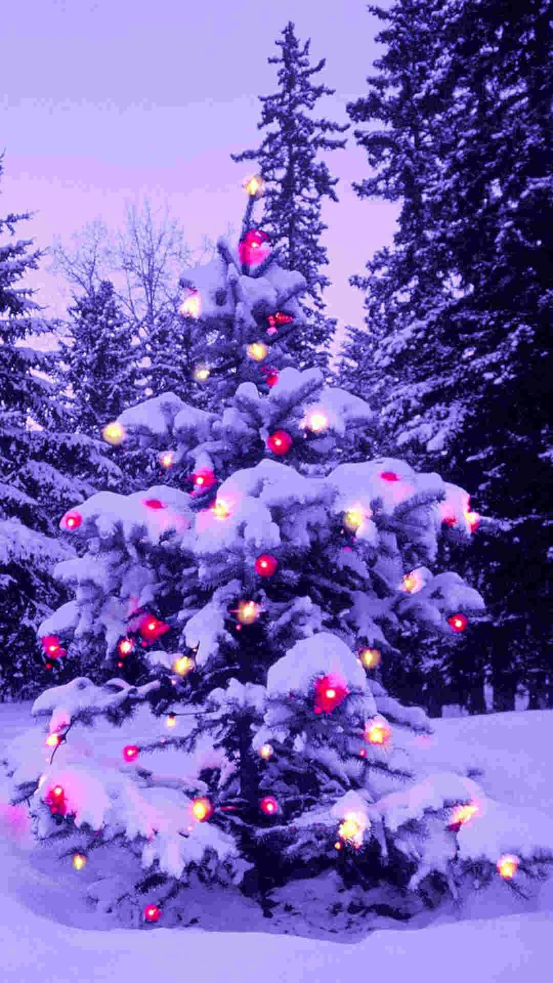 pink light 2014 Christmas tree iPhone 6 plus wallpaper – nature #2014 # Christmas #