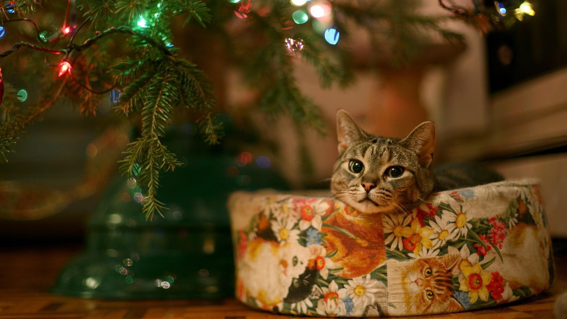 Cat under Christmas tree Widescreen Wallpaper – #2403