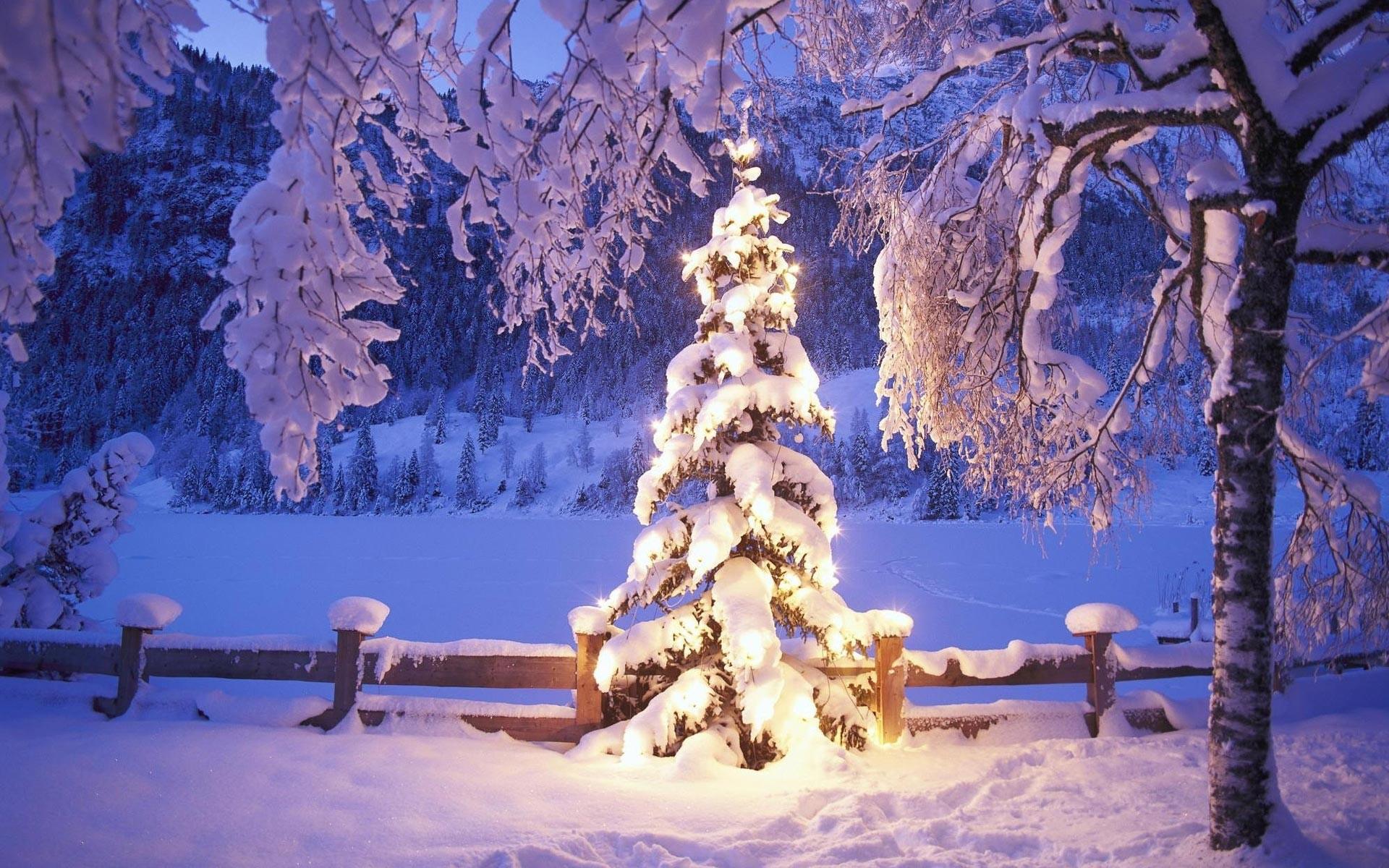 Christmas Tree Lights Wallpaper Background 8549