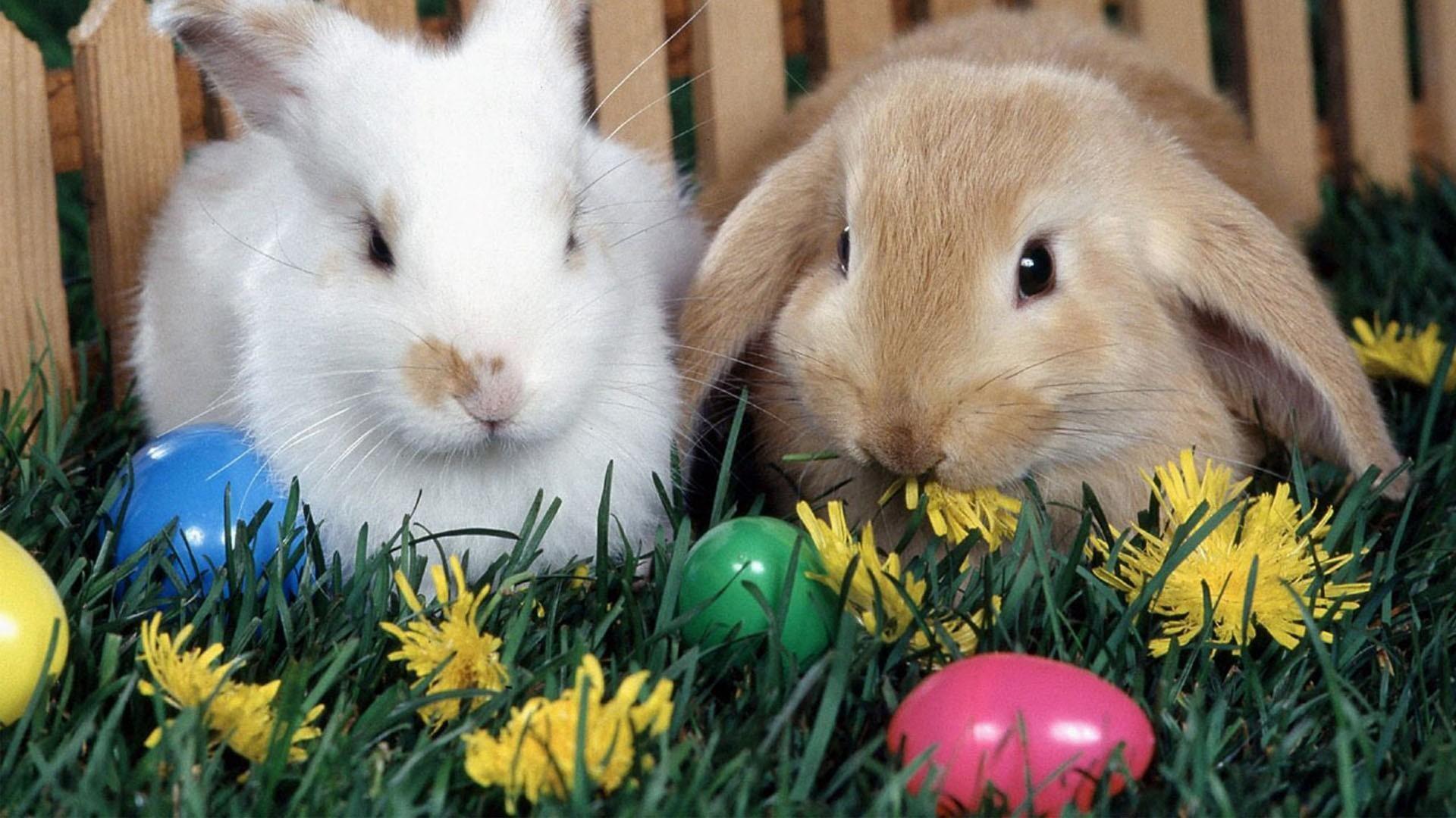 Easter Pictures For Desktop Wallpaper (13)