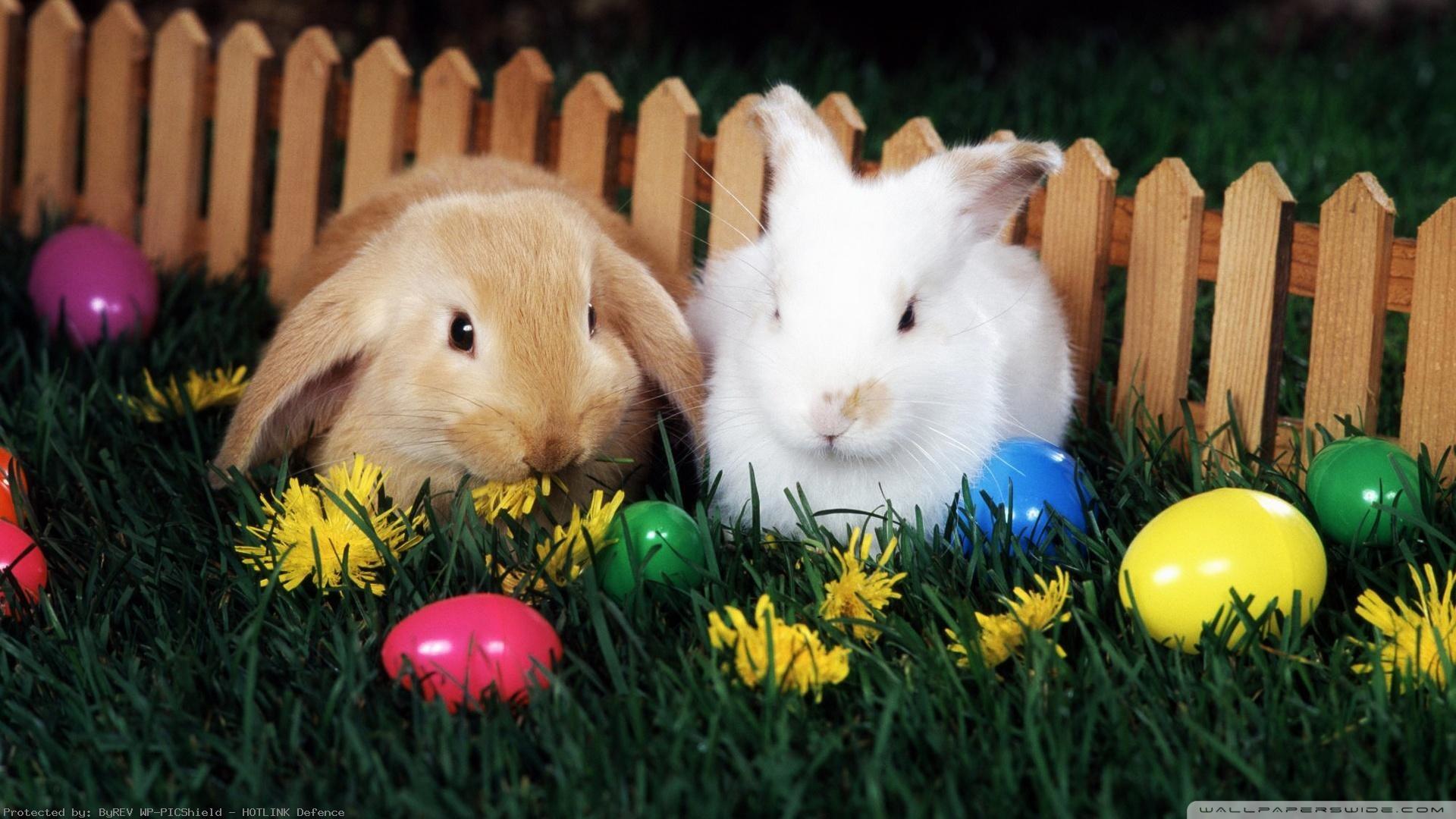 Beautiful-Free-Easter-Desktop-wallpaper-wpc9002698
