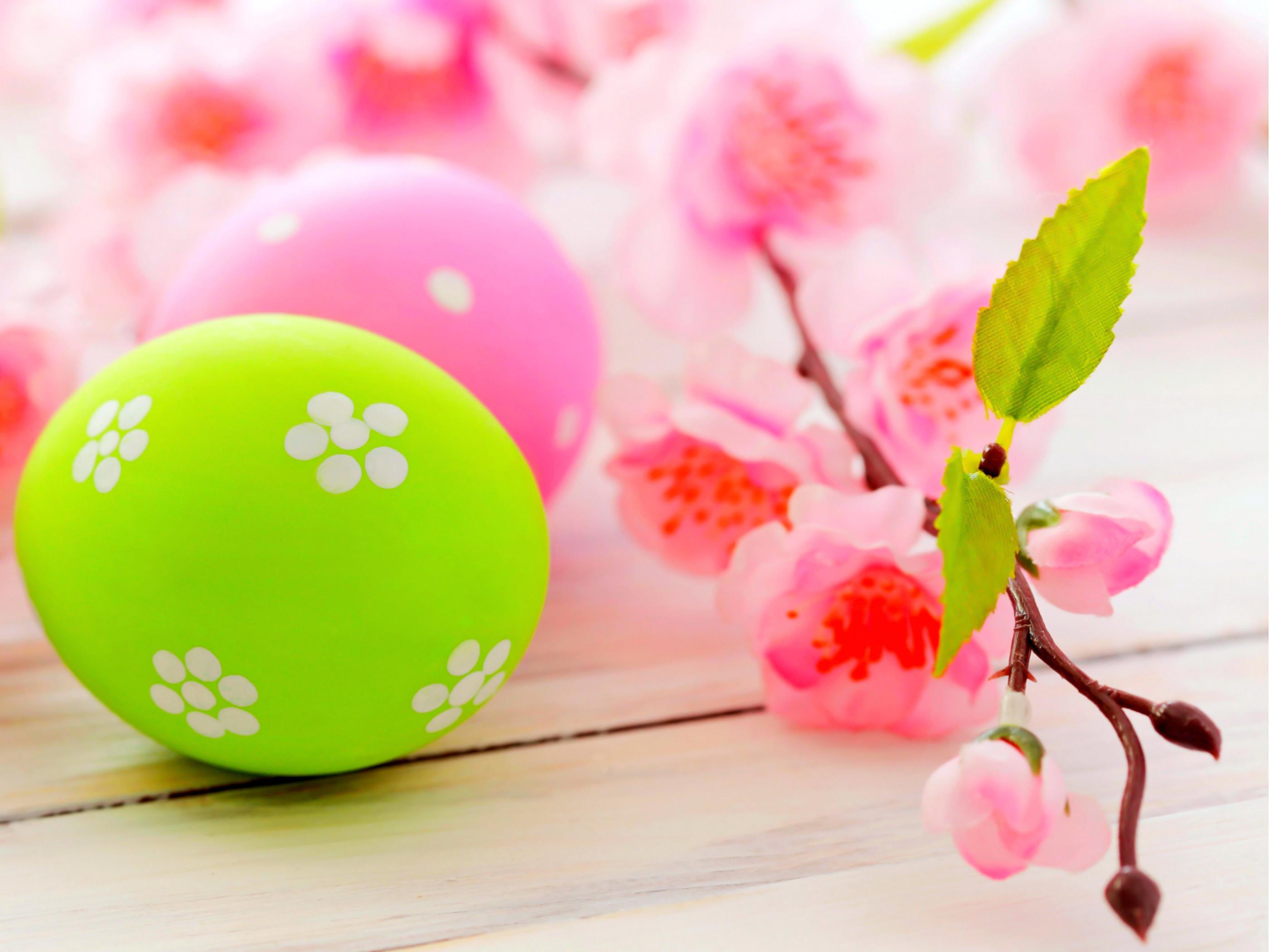 Easter Tulips Wide Desktop Background wallpaper free | Adorable Wallpaper &  Elegant Backgrounds | Pinterest | Easter, Desktop backgrounds and Wallpaper