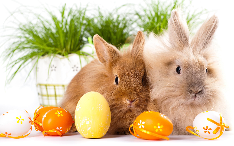 Easter Bunny Desktop Wallpaper (14)
