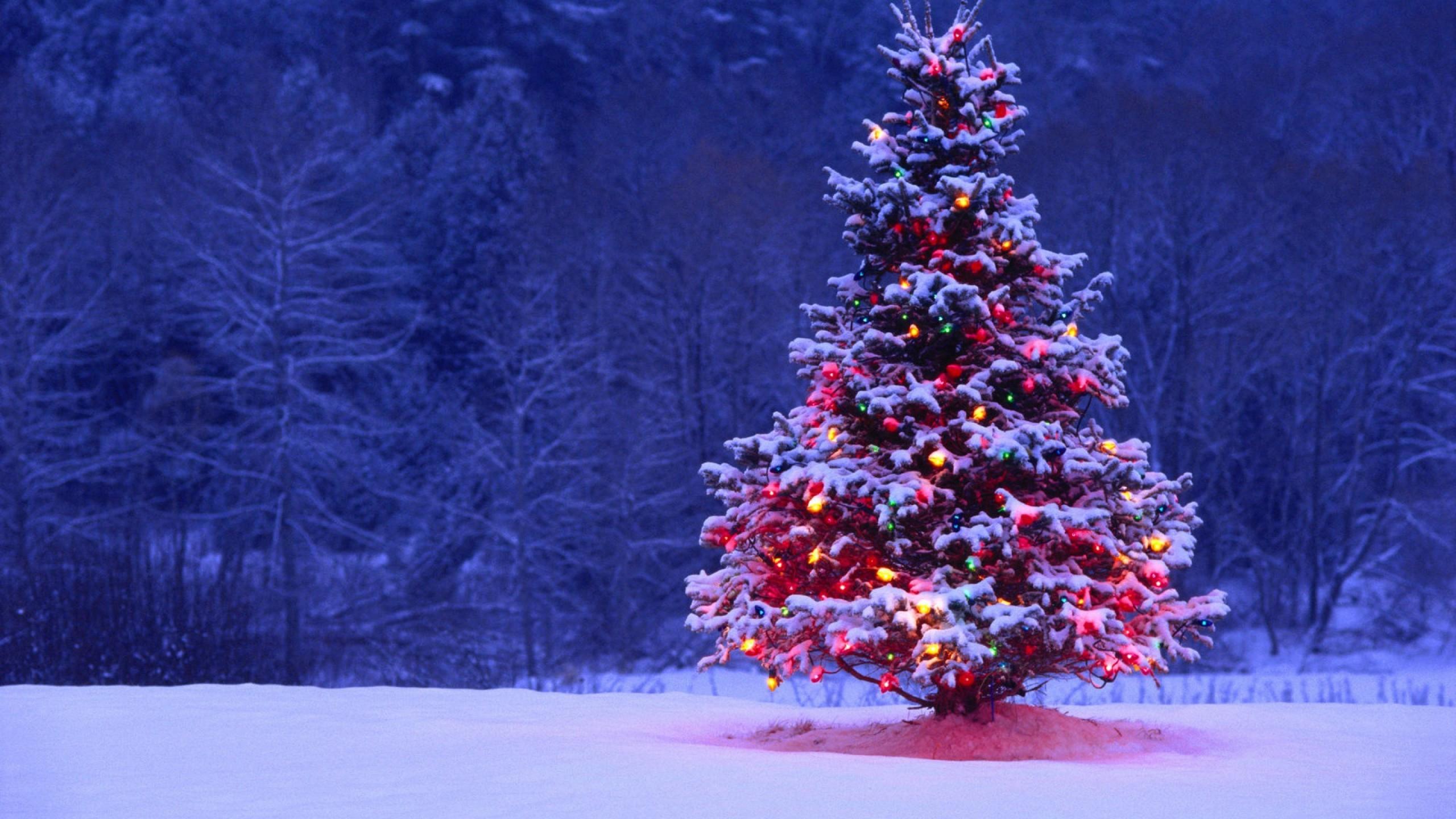 Christmas Tree Lights Snow Forest Holiday Desktop Wallpaper Uploaded by  DesktopWalls