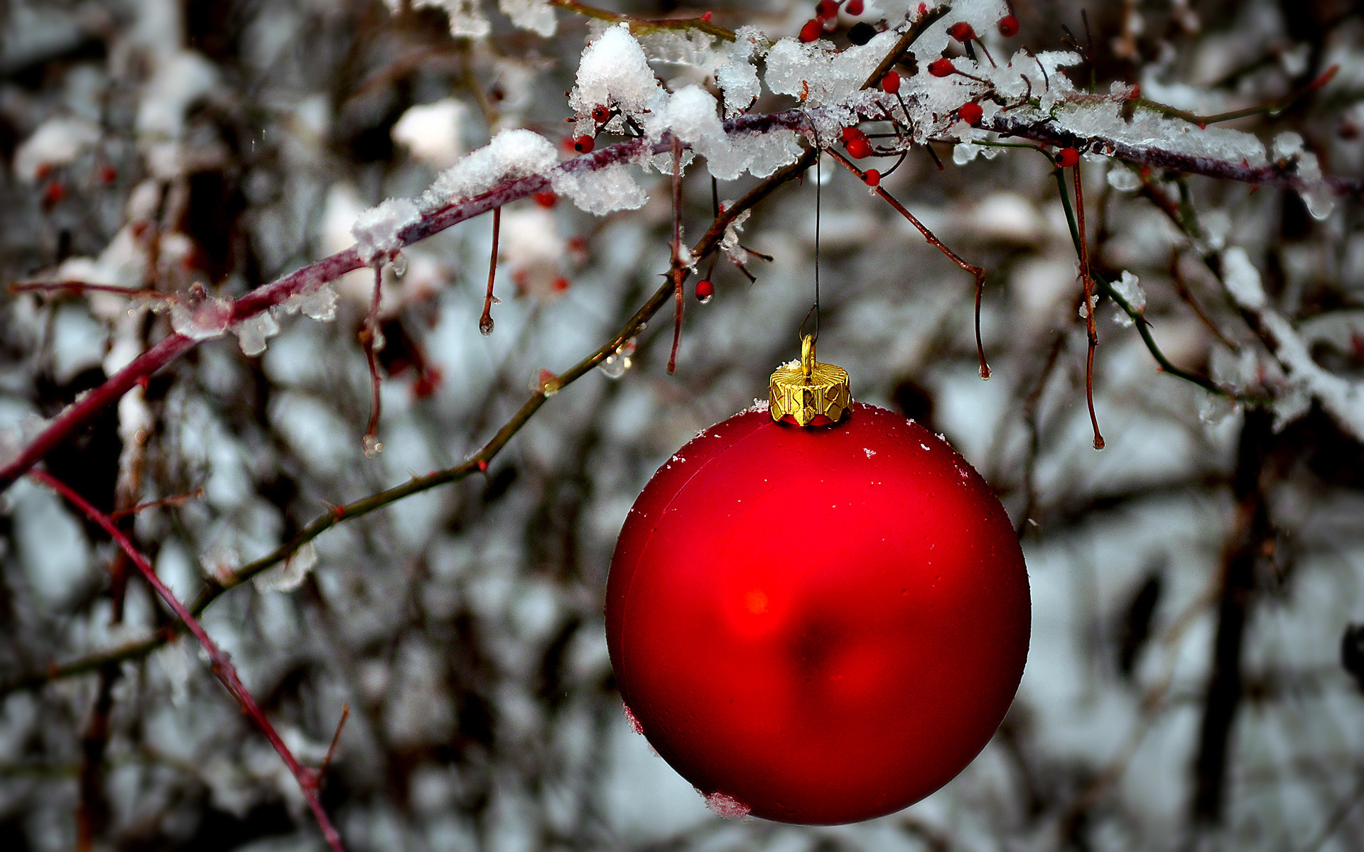 Red holiday ornament hanging in a snow covered bush outdoors in the woods