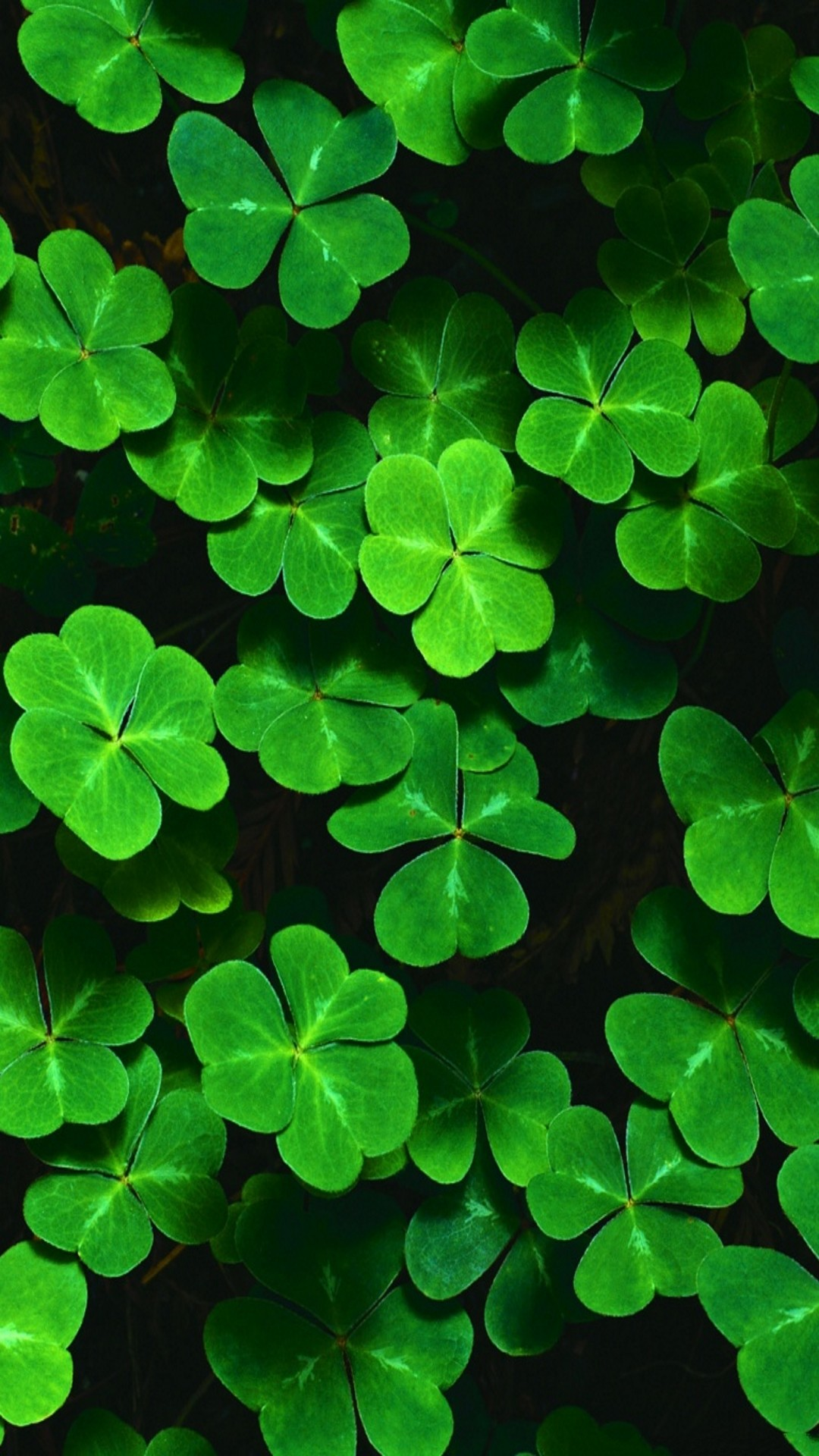 Customize your iPhone 6 Plus with this high definition Shamrocks wallpaper  from HD Phone Wallpapers!
