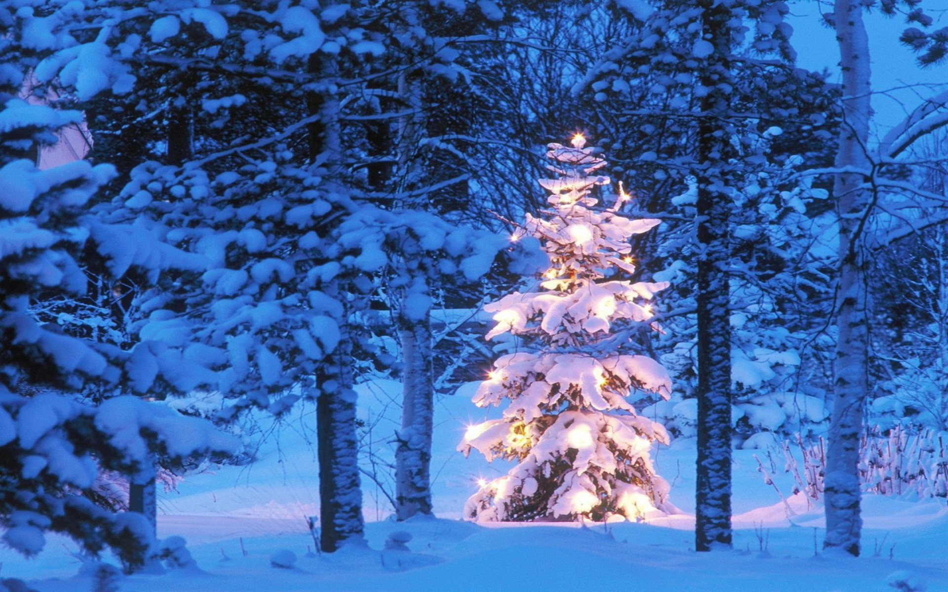 Free Christmas Wallpaper Backgrounds.74 Christmas Tree Desktop Background