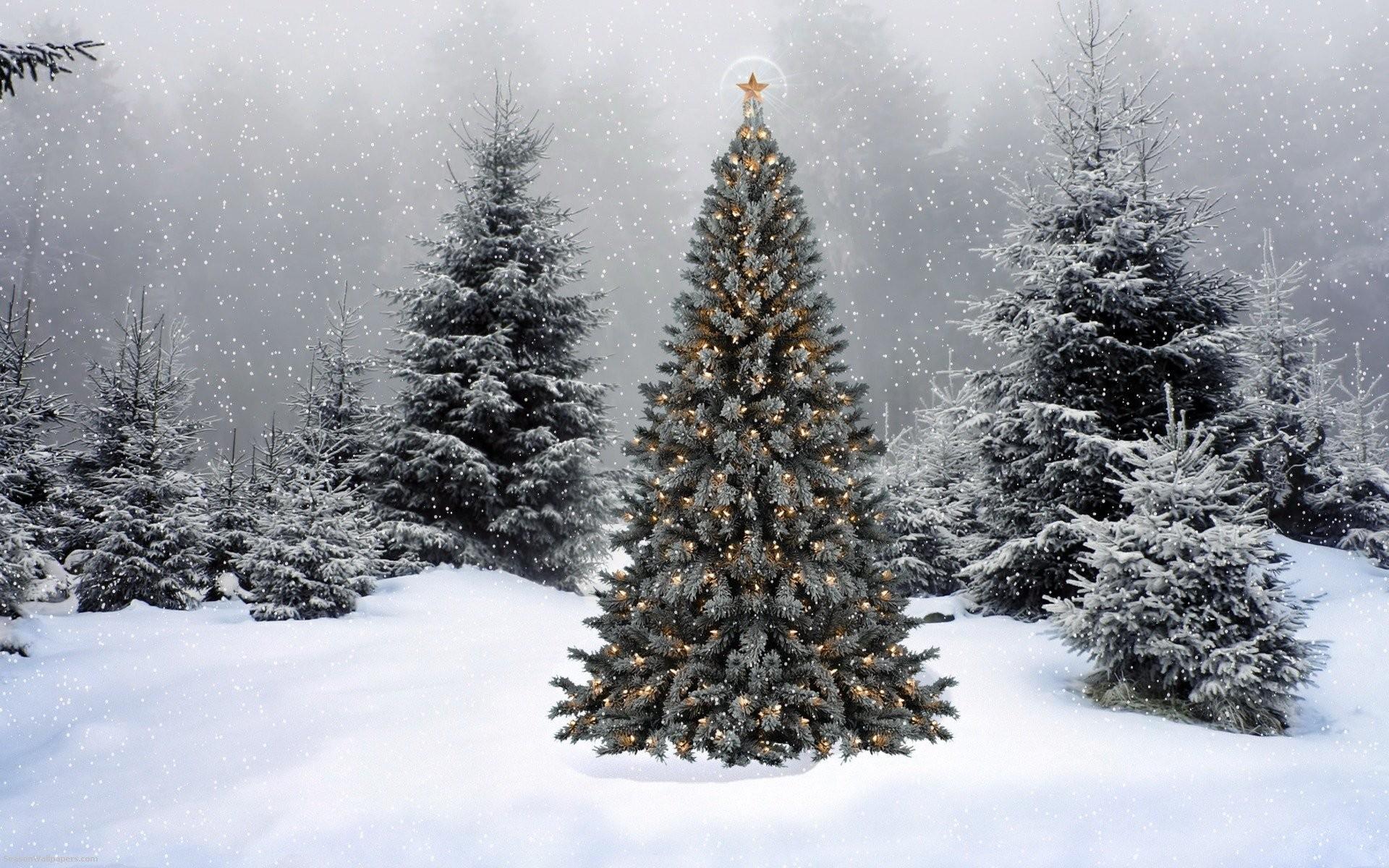 Christmas Tree In Snow Wallpaper