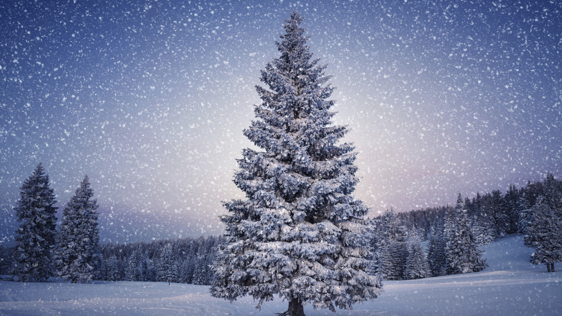Christmas Trees Covered In Snow (44 Wallpapers)
