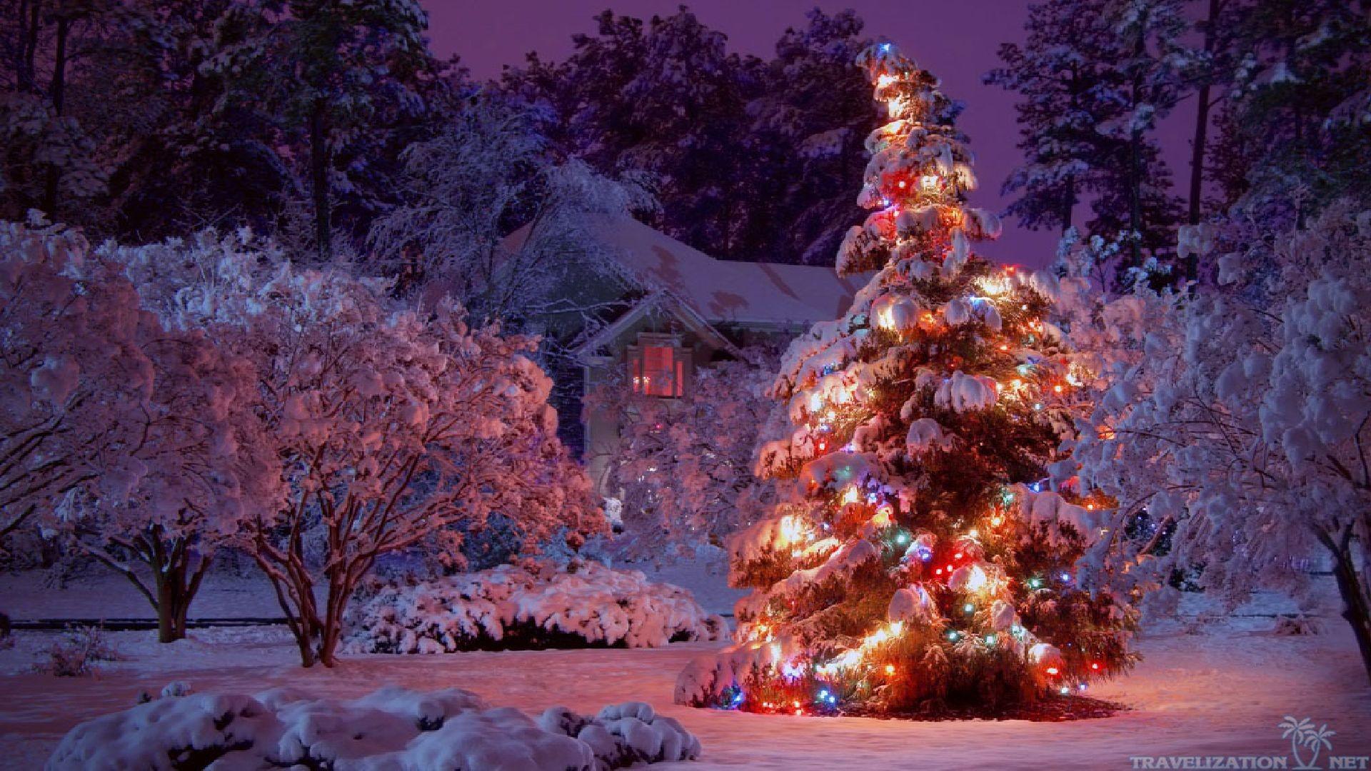 Christmas Lights Tree HD Wallpaper
