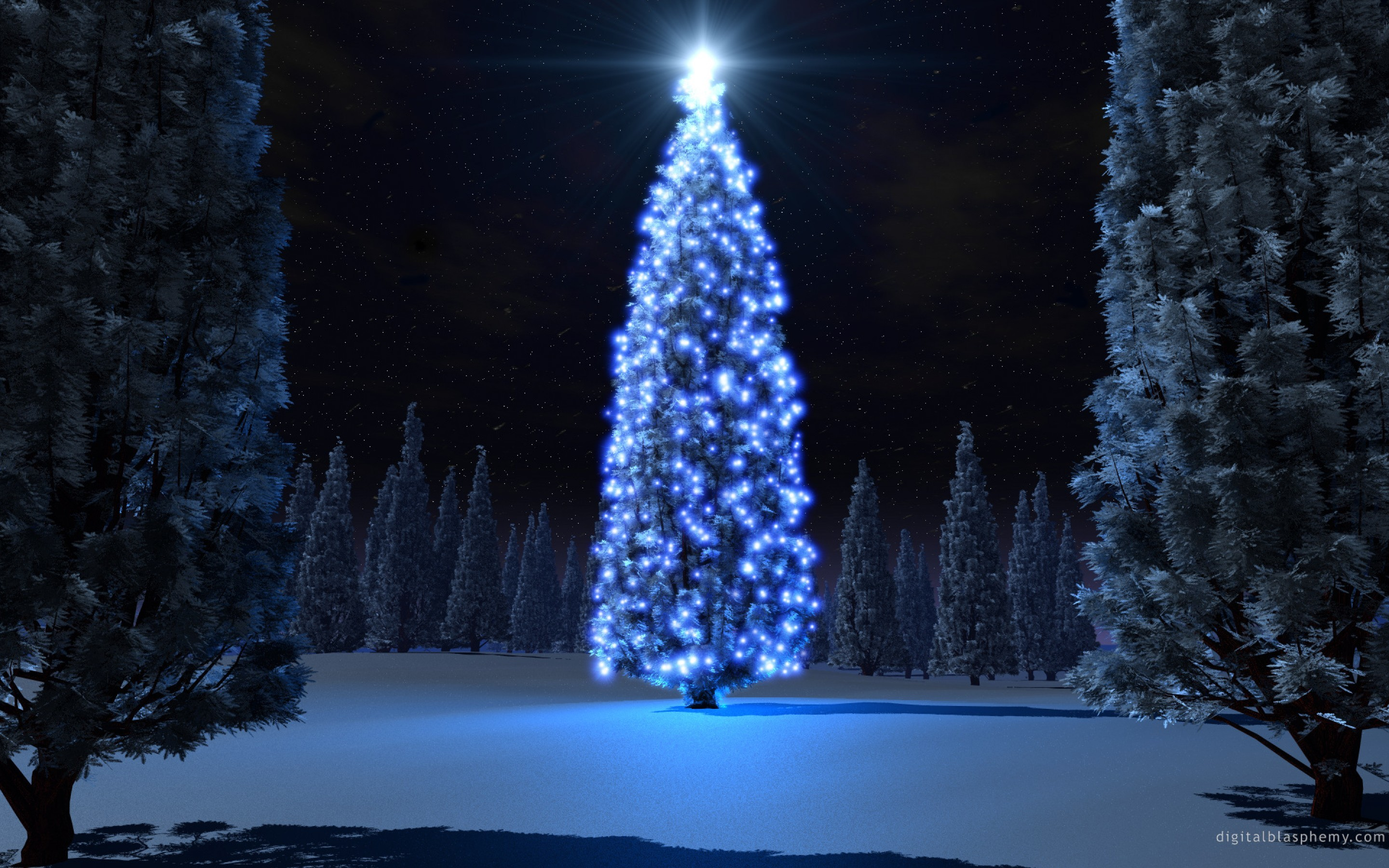 Beautiful Christmas Trees and Starlight Photo Gallery HD Wallpaper  Widescreen