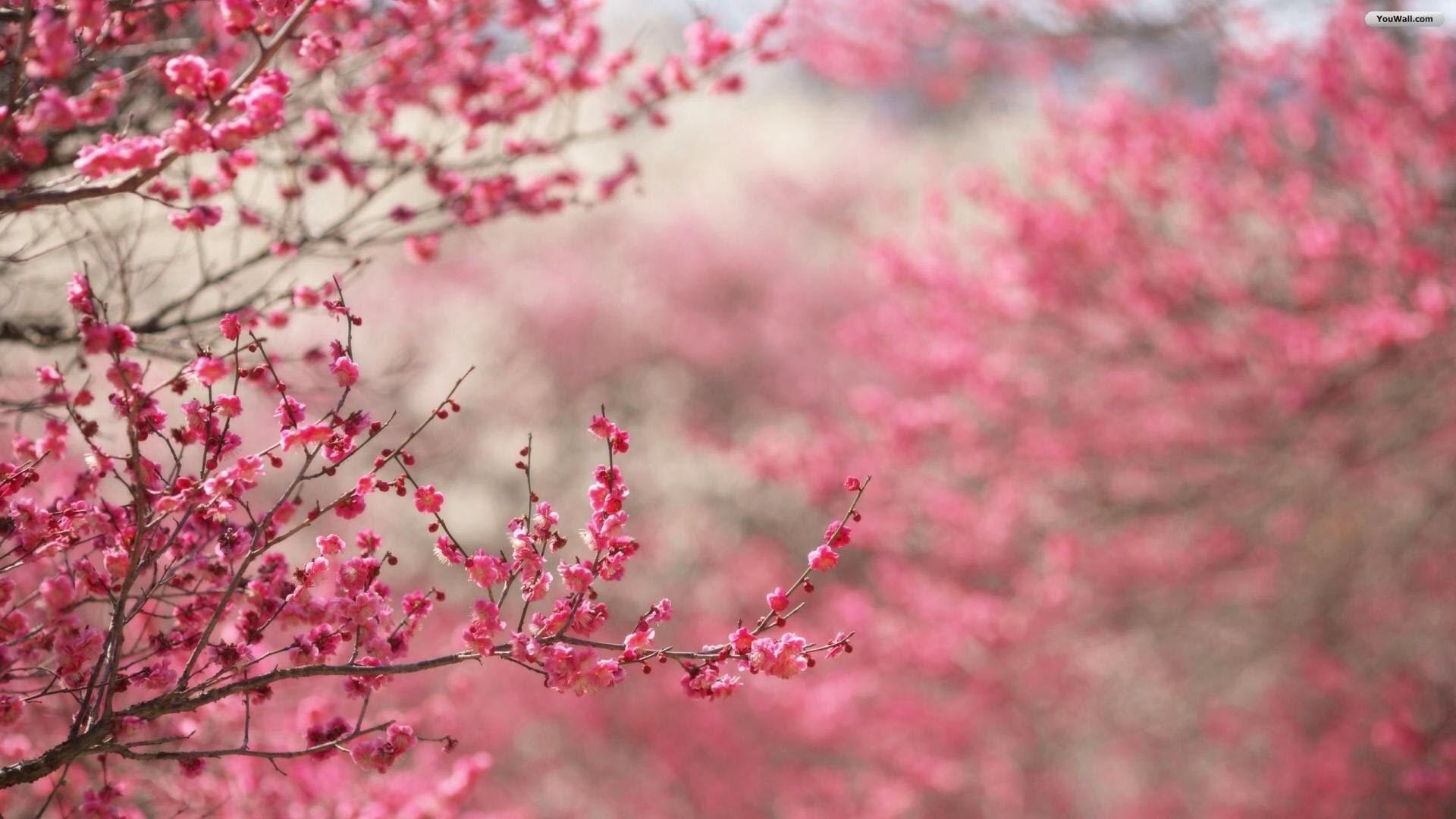 Pink Buds Wallpaper