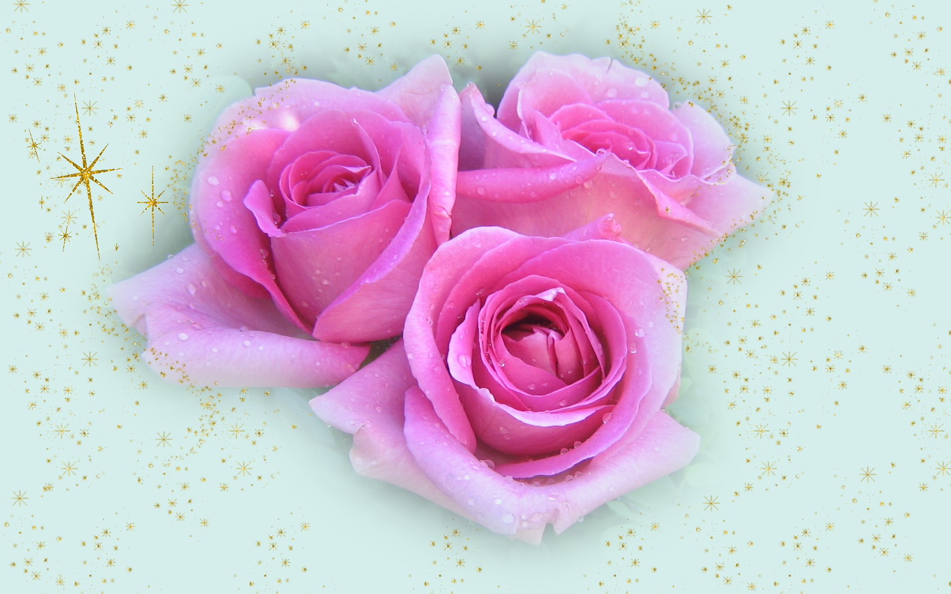 Christmas pink roses. widescreen Christmas wallpapers