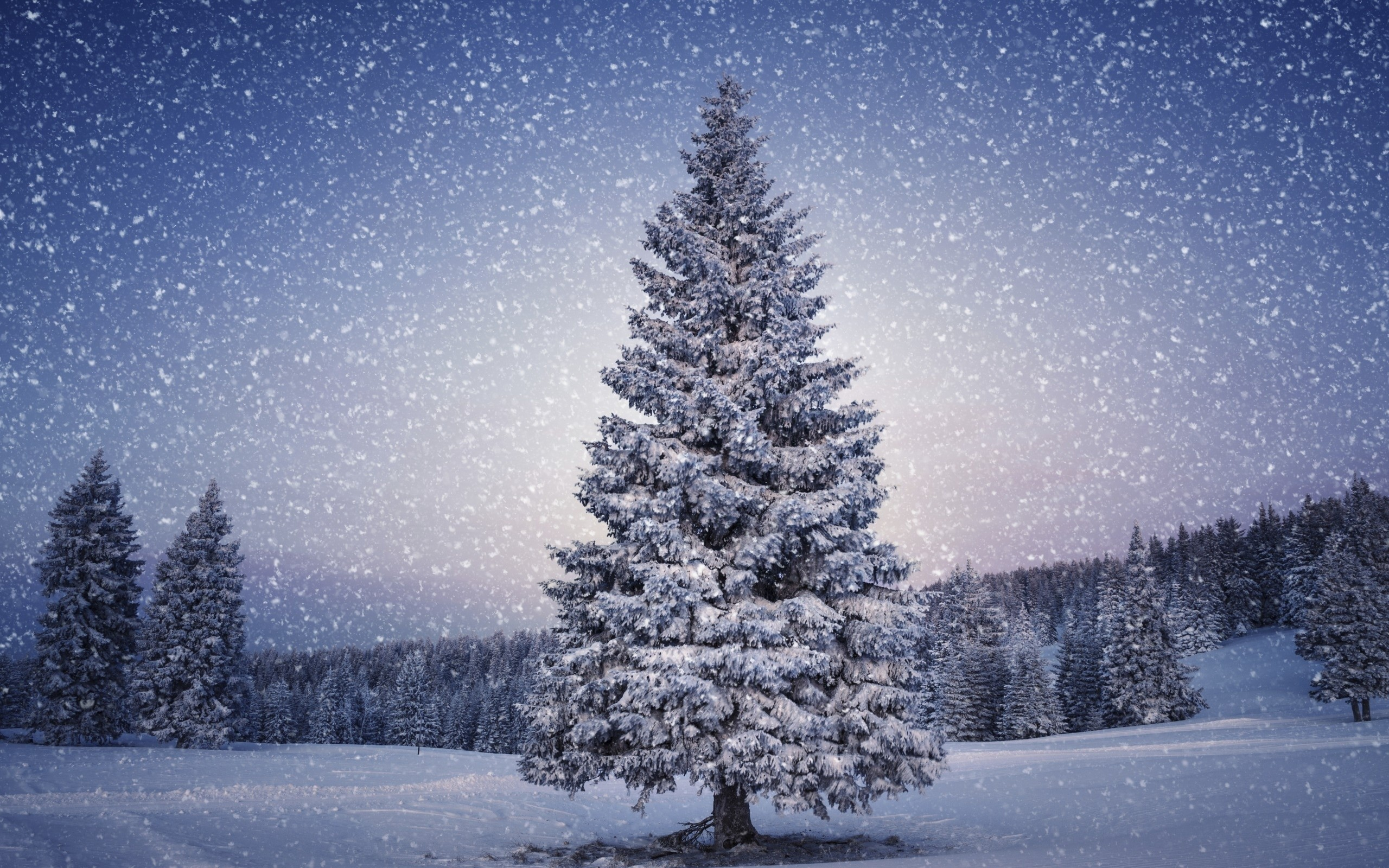 HD Winter Wallpaper.
