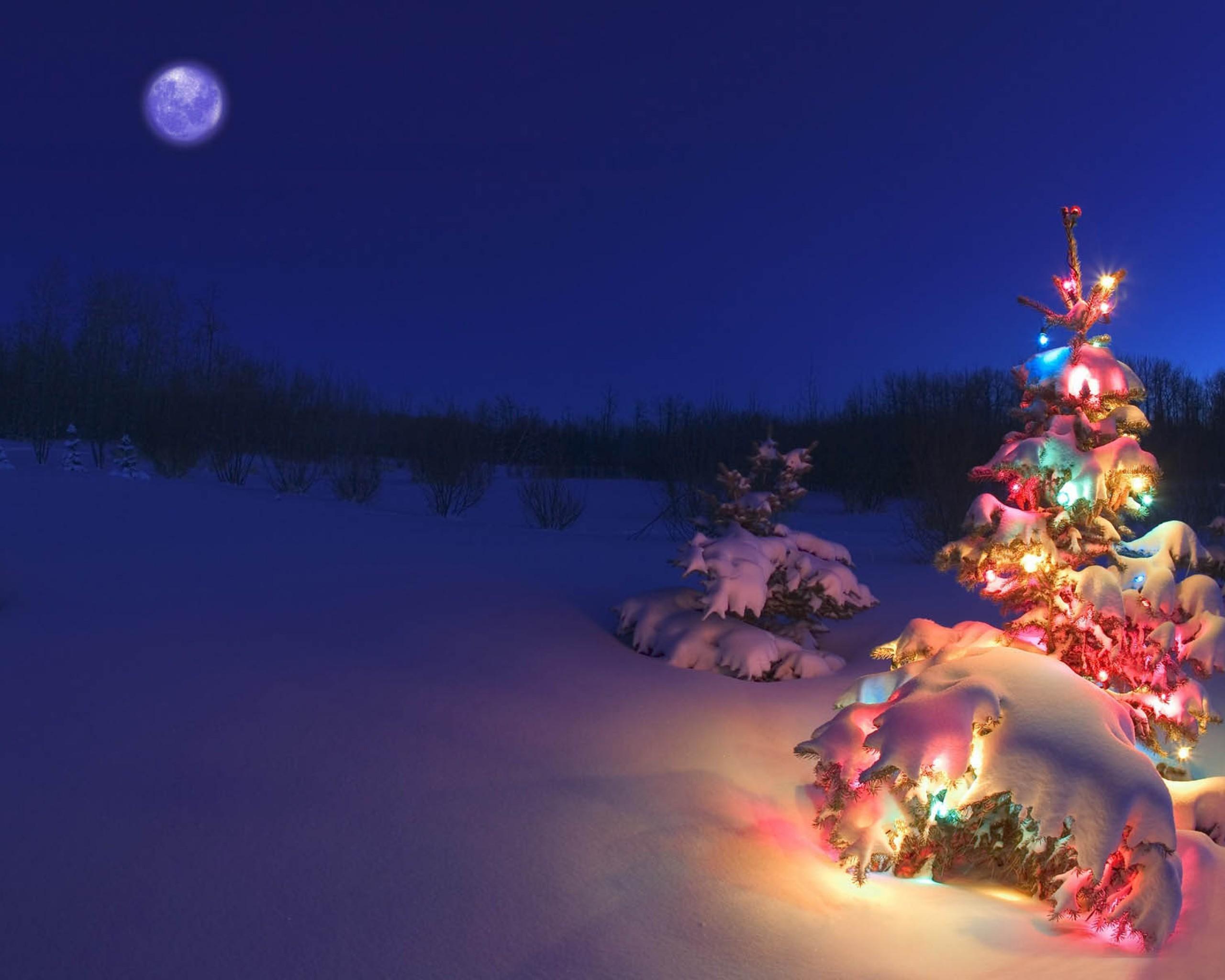 Winter Wonderland: snowy winter scenes & Christmas trees.