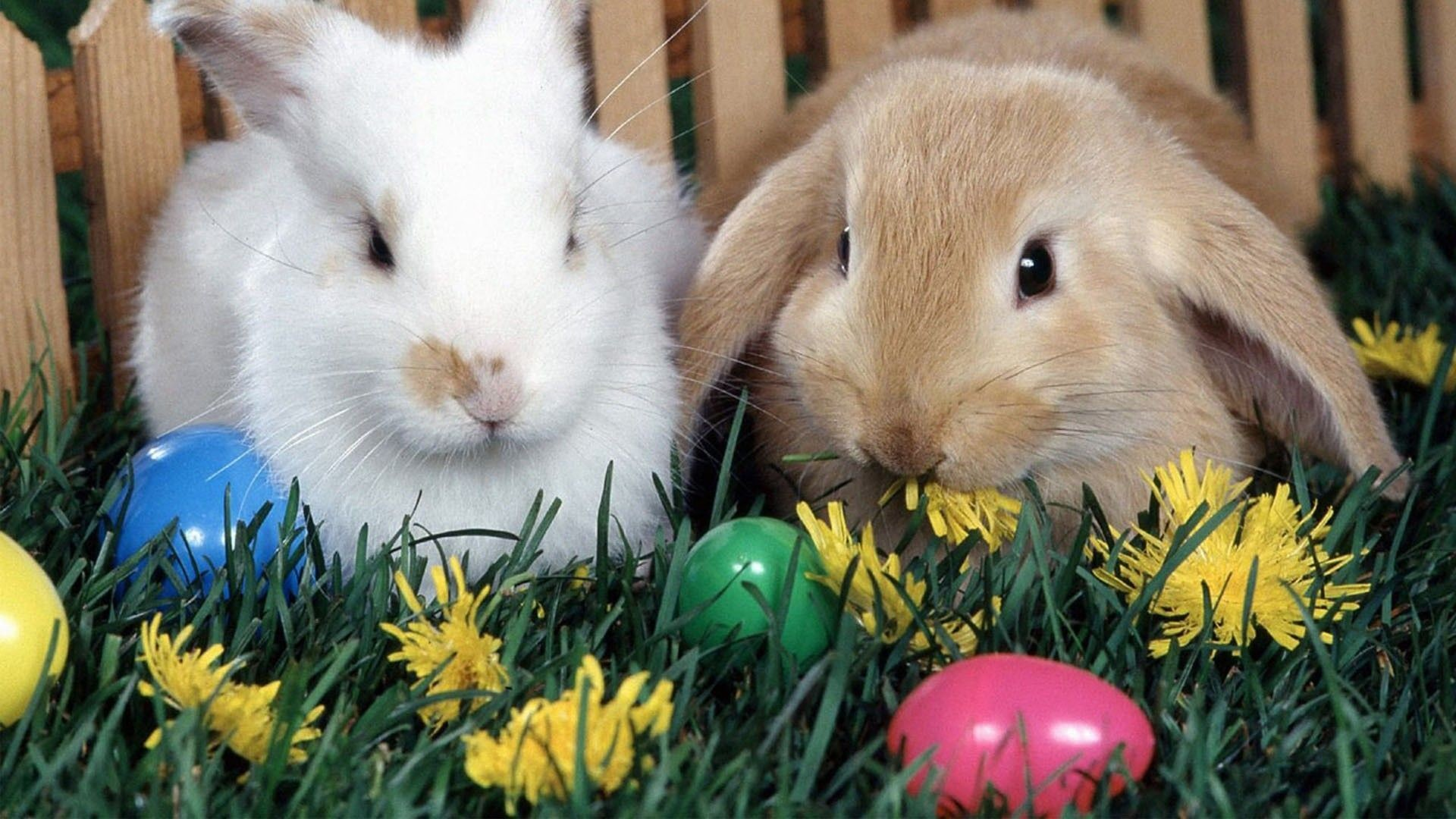 Easter Bunny Wallpaper Backgrounds (08)
