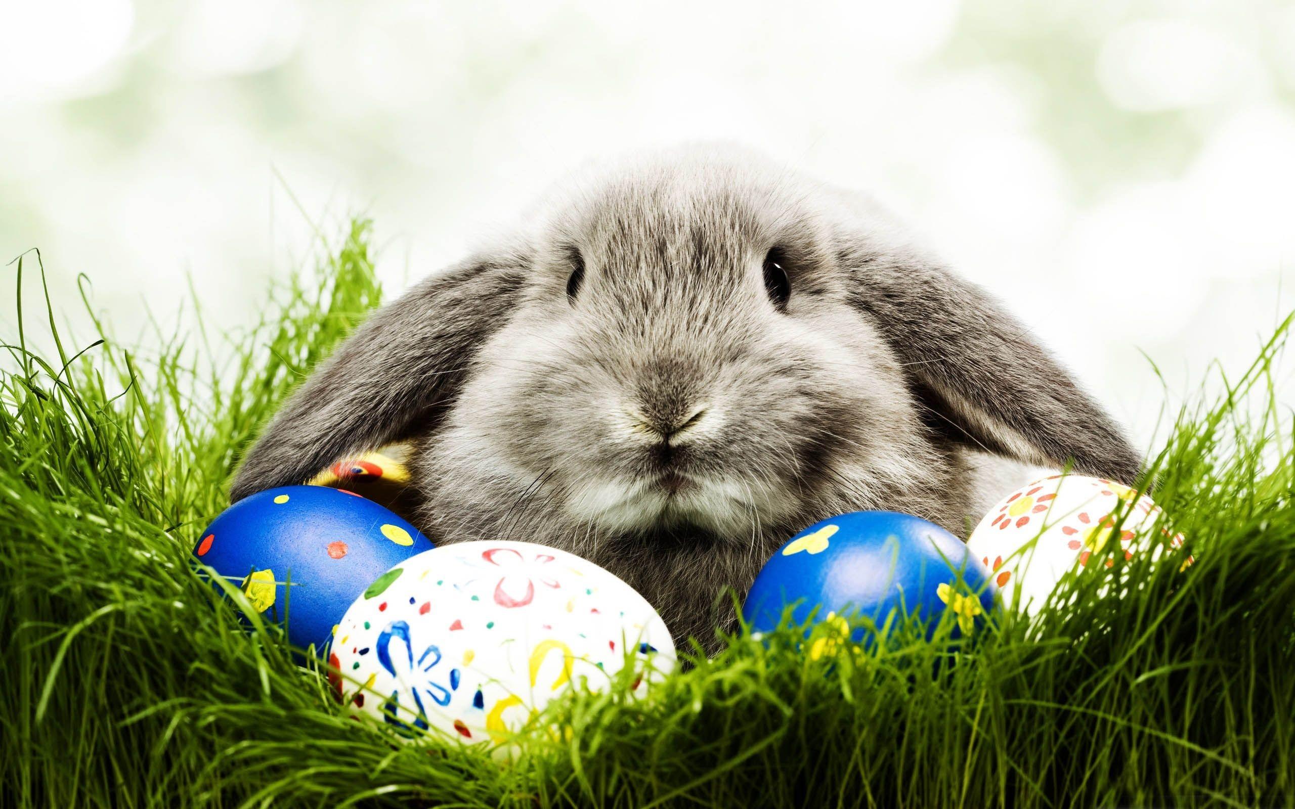 Easter Bunny Desktop Wallpaper (10)
