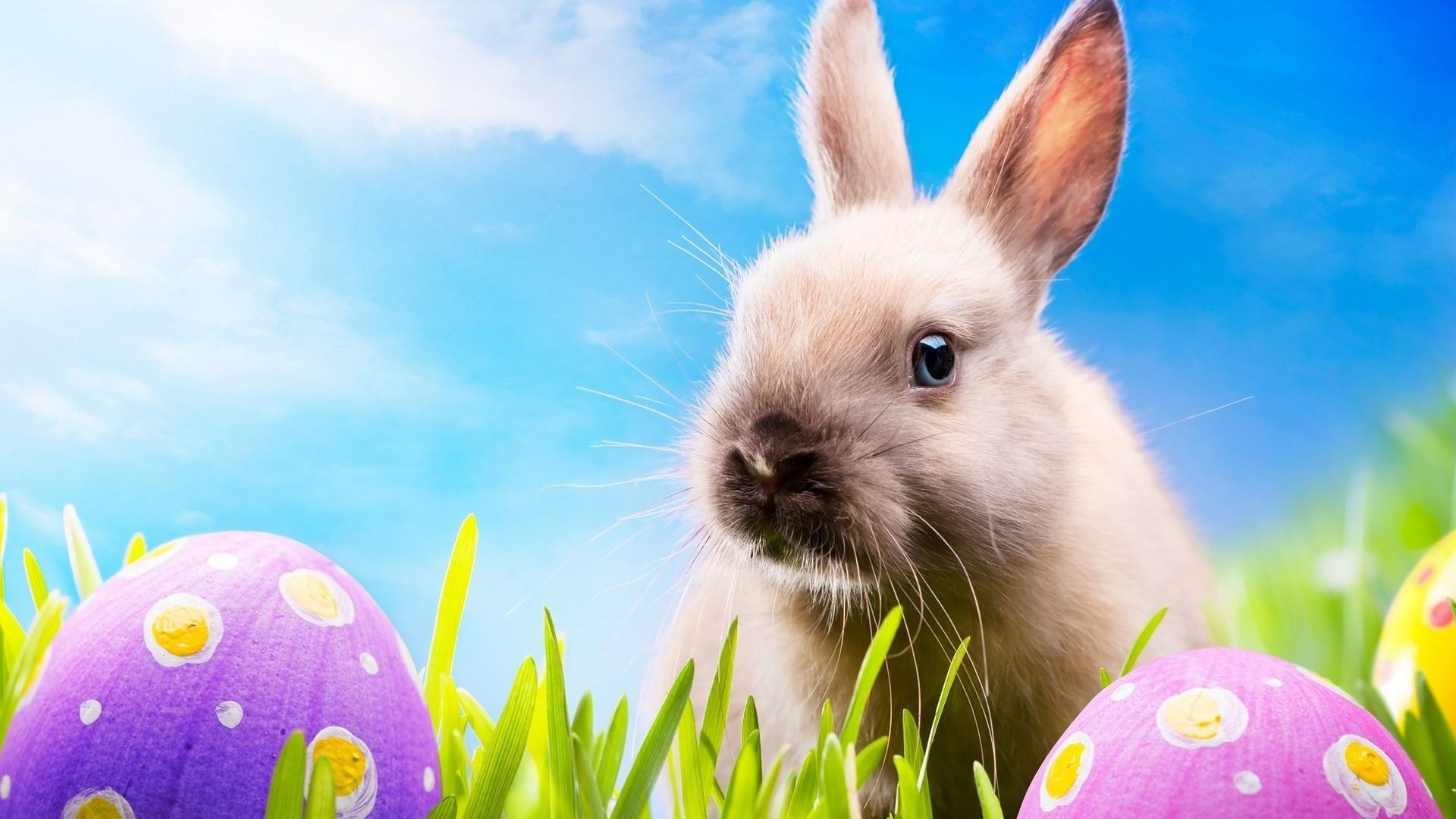 Easter HD Wallpapers – Wallpaper, High Definition, High Quality .
