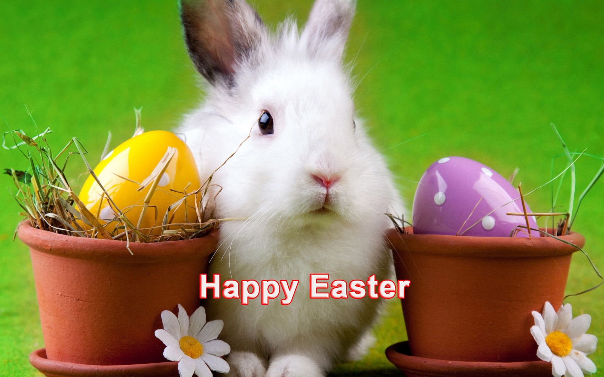 Happy Easter cute white bunny hd desktop wallpapers ,hd ,images