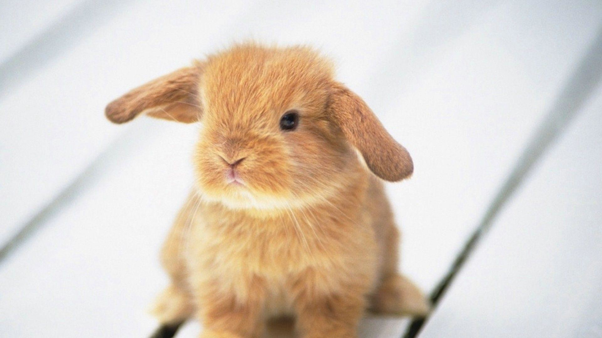 Easter wallpaper bunny bunnies cute px – #1412 | Easter .