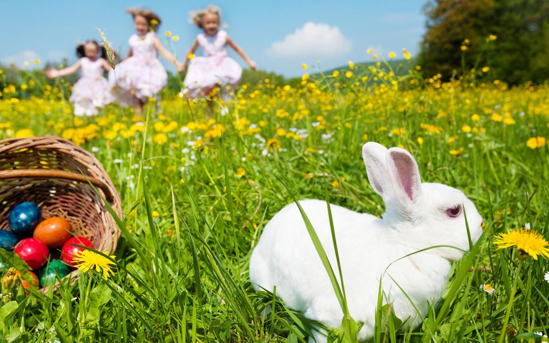 Easter Bunny Field