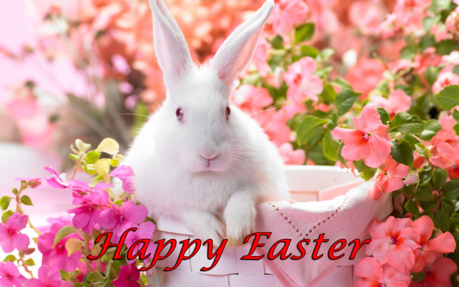 Happy Easter, White Bunny in Basket Surrounded by Flowers .