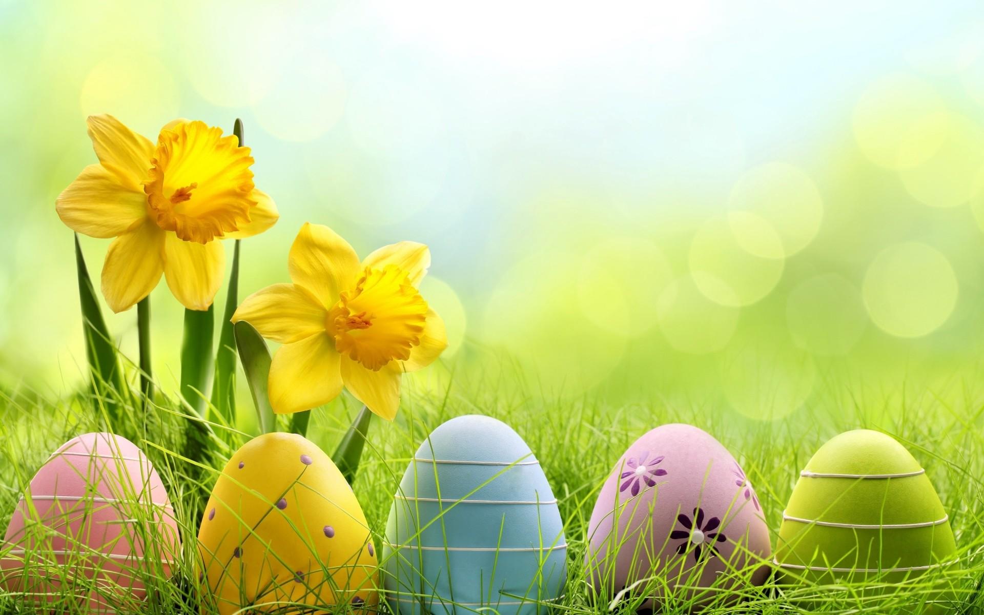 Wallpaper HD Cute Easter Eggs – HD Wallpaper Expert