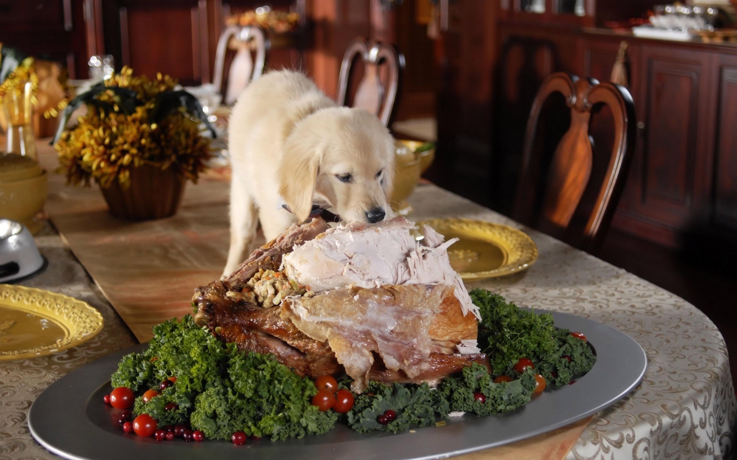 Even puppy eats turkey in Thanksgiving wallpaper