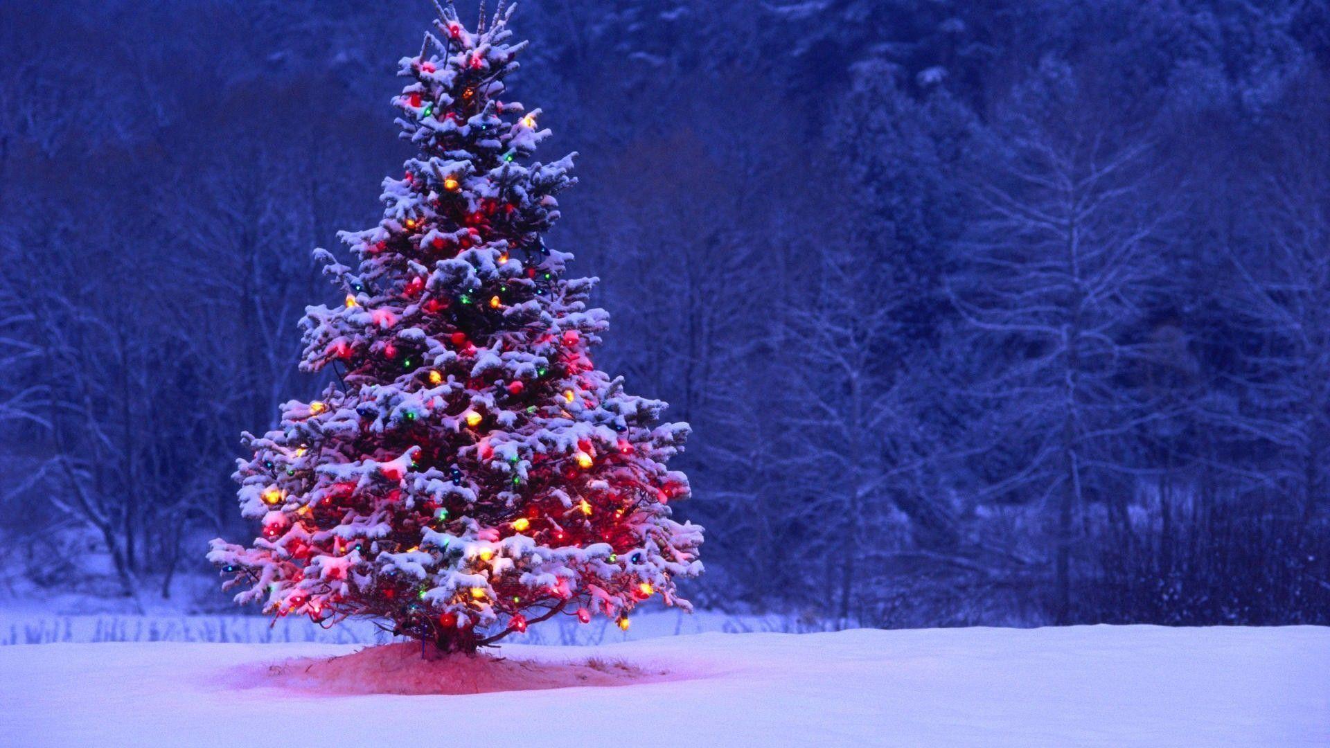 Wallpapers For > Winter Christmas Tree Desktop Backgrounds