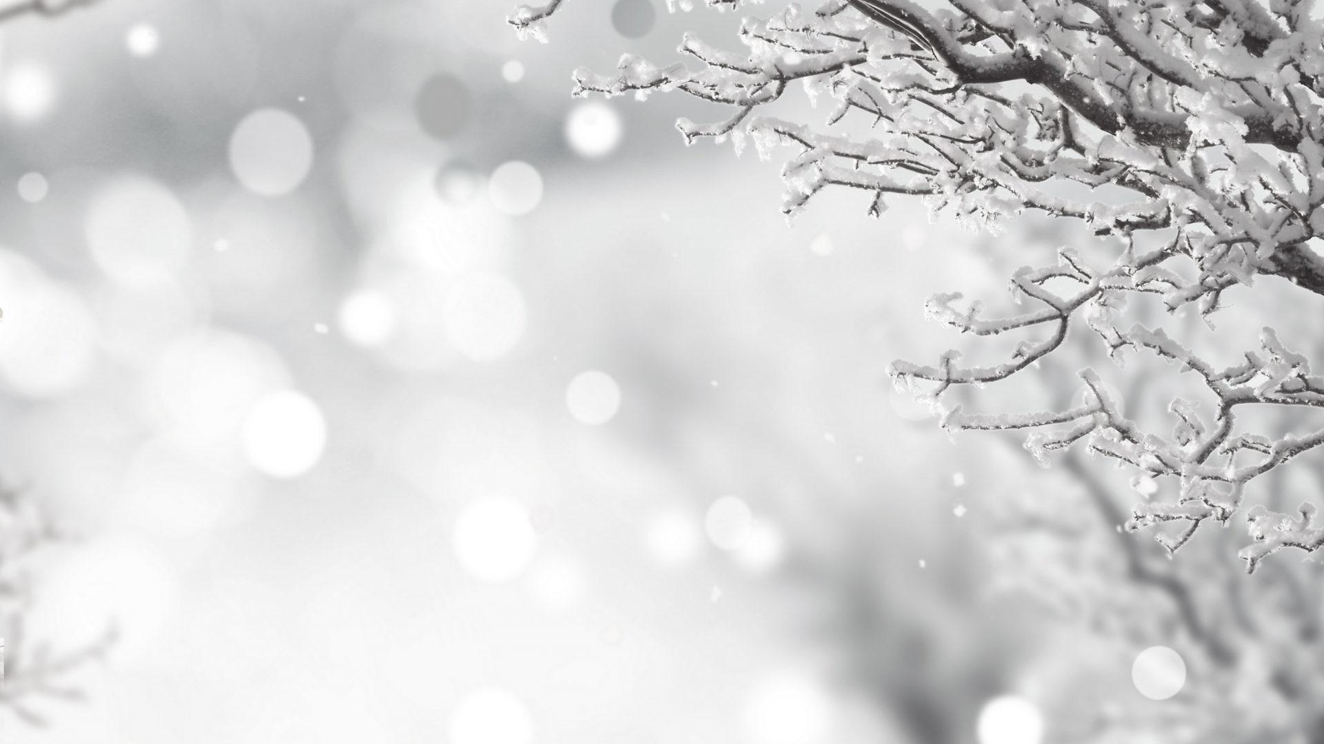Splendor Christmas Xmas Bokeh Merry Time Magic Snow Holidays Tree Snowy  Winter Elegant Wallpaper – 4350×3518