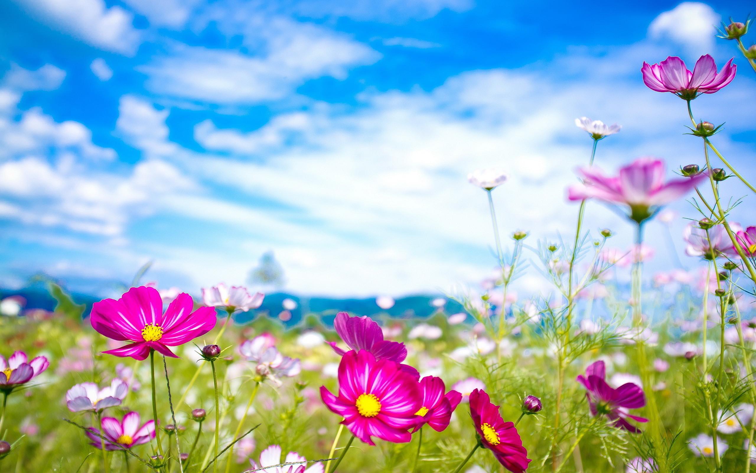 Pink Flowers Summer Wallpaper in